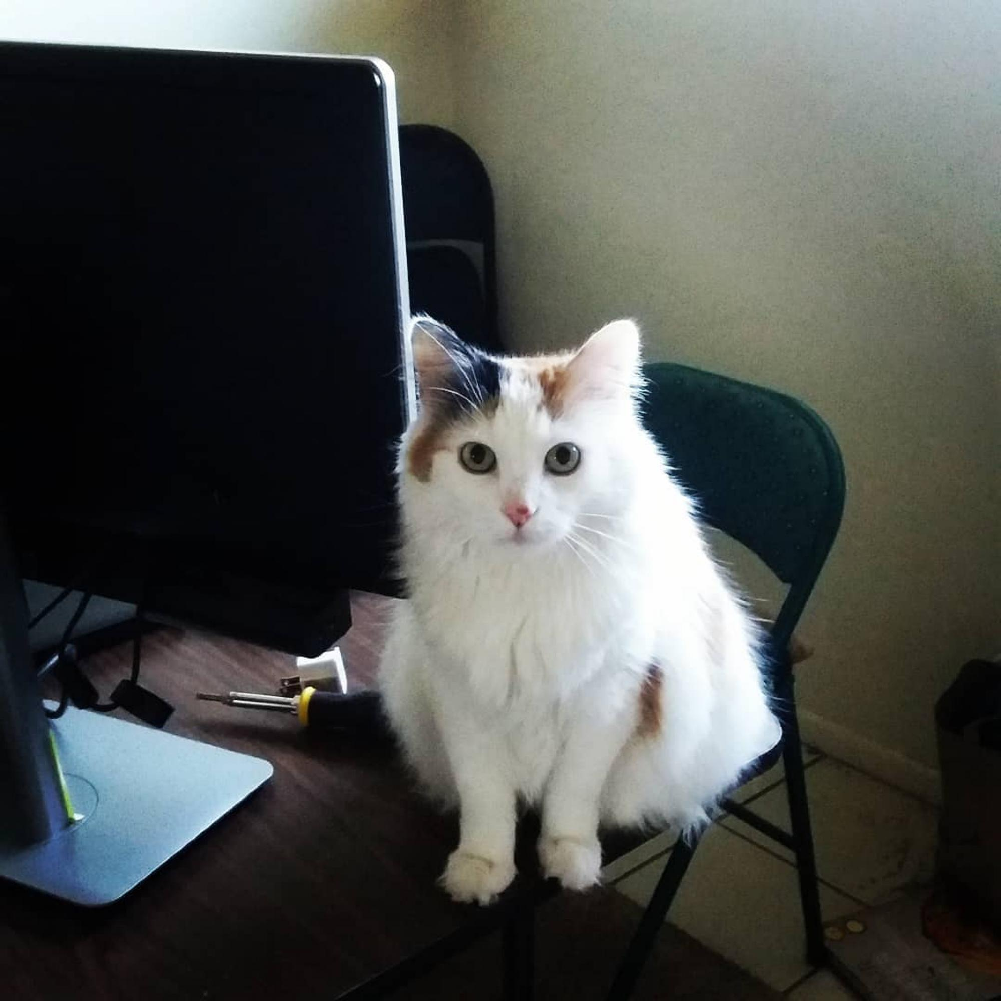 Miss Bumblebee Cabbagepatch making sure my desk setup is purrgonomic. – Aileen J. Dingus, marketing and events coordinator and National Science Foundation Innovation Corps site program manager, Tech Launch Arizona