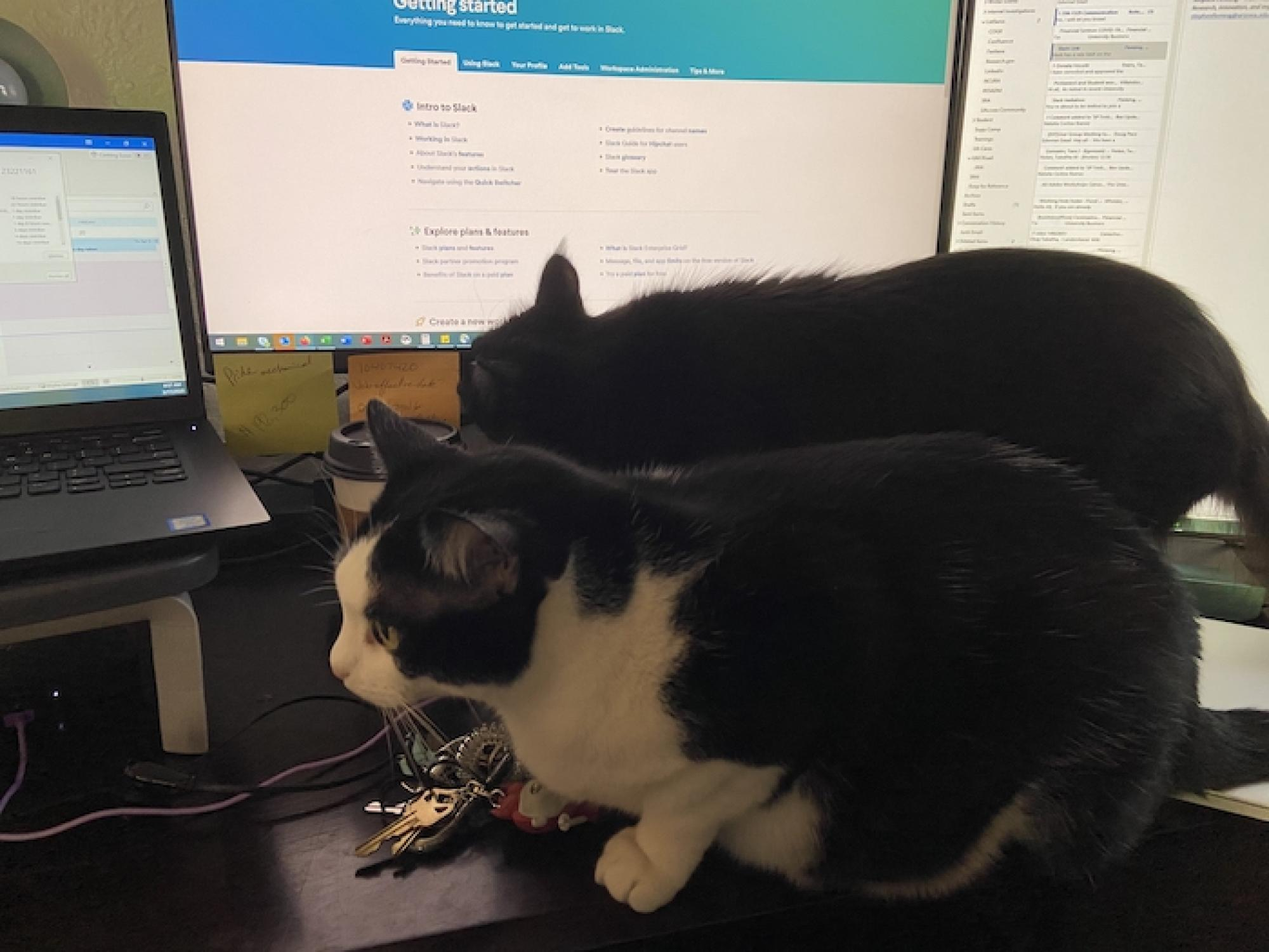 Max  shows Coco around the new desk setup and explains what can and cannot be knocked off the desk. – Tabatha Holan, principal sponsored projects administrator in Sponsored Projects and Contracting Services