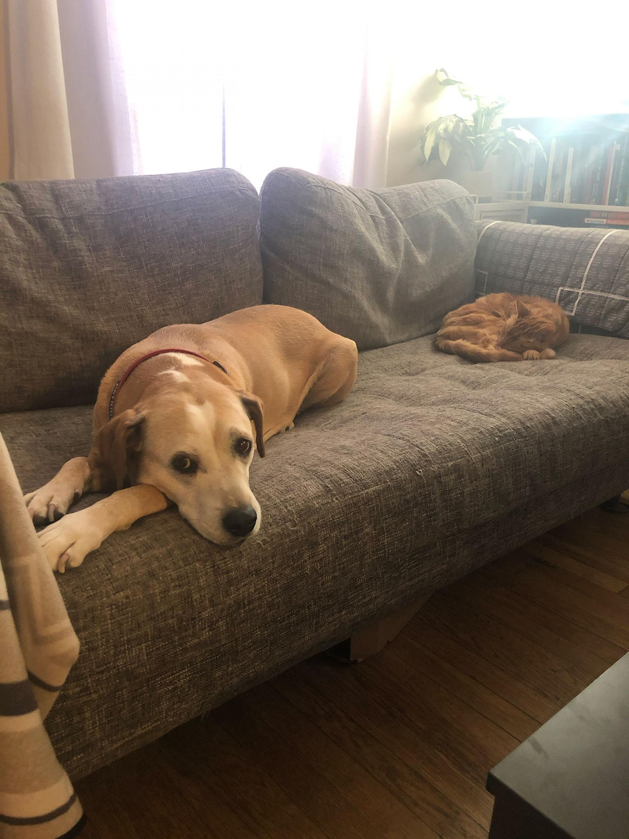 My furry friends enjoying their lunch break . They follow a strict schedule consisting mostly of snacks, naps and cuddles. The pup is Rey and the kitty is Jetson. – Kayleigh Kozyra, doctoral student and graduate assistant, College of Fine Arts