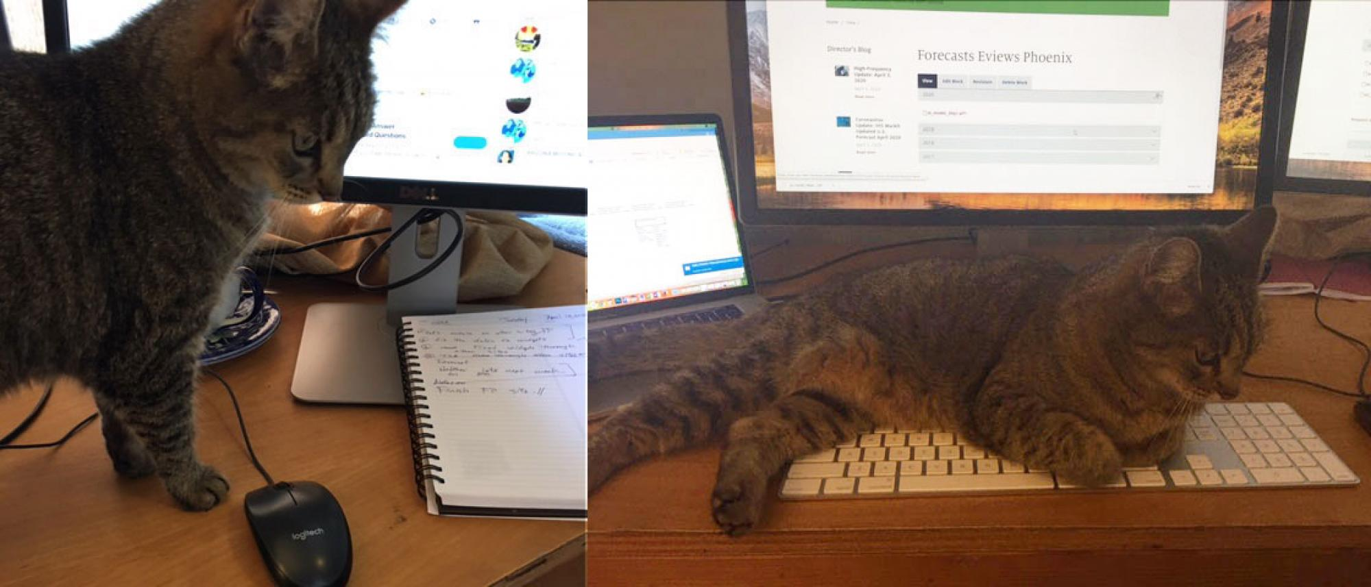 My kitty Violet was hunting my mouse, but then as soon as I turned around, she settled for a nap on the keyboard. Cats! Go figure! – Maile Nadelhoffer, website designer/developer, Eller College of Management