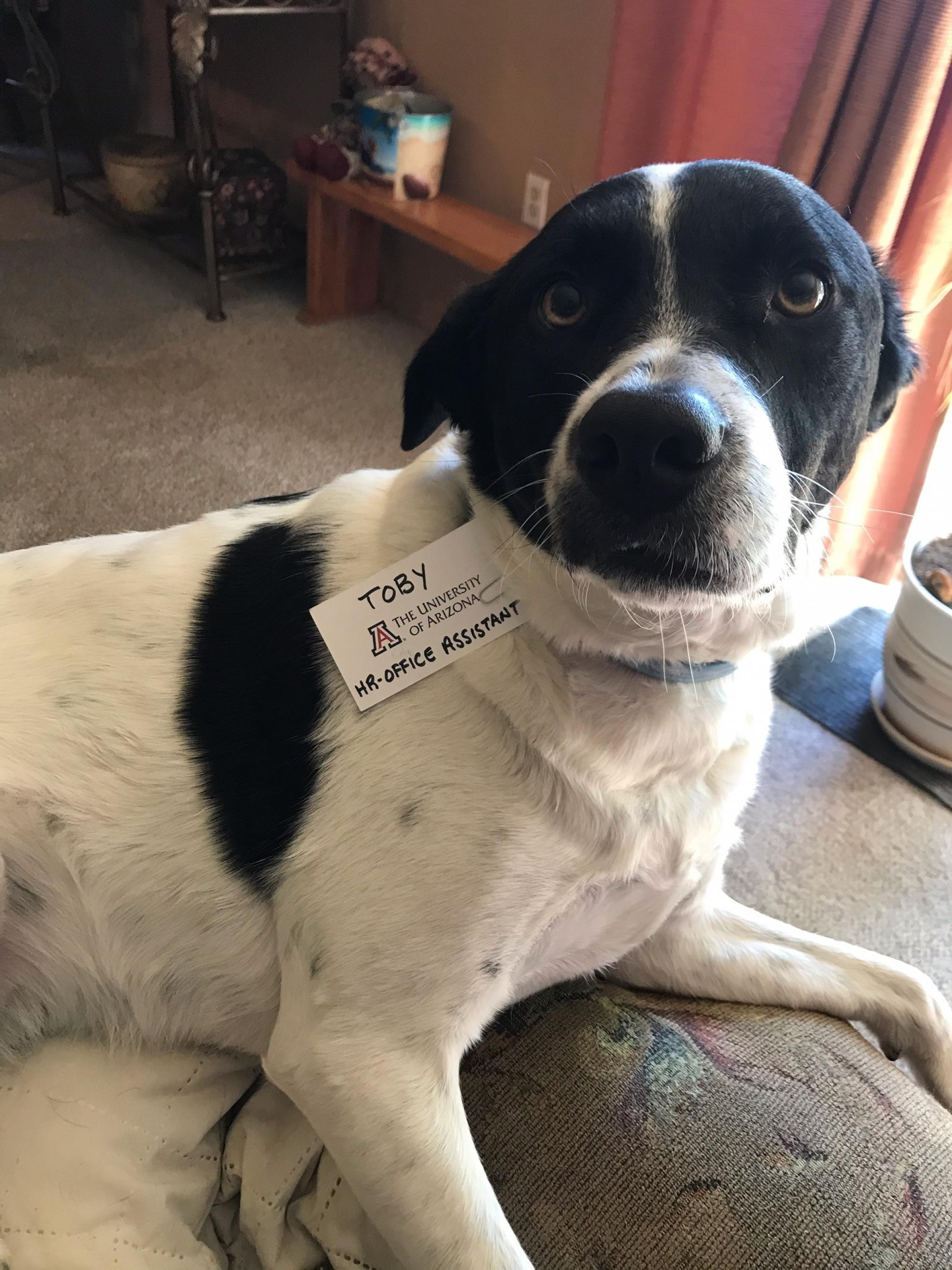 This is Toby, my assistant. He lets me know when it's time to go for a walk and time to get a snack or treat. What would I do without him? – Diane Schaller, administrative associate in Housing and Residential Life
