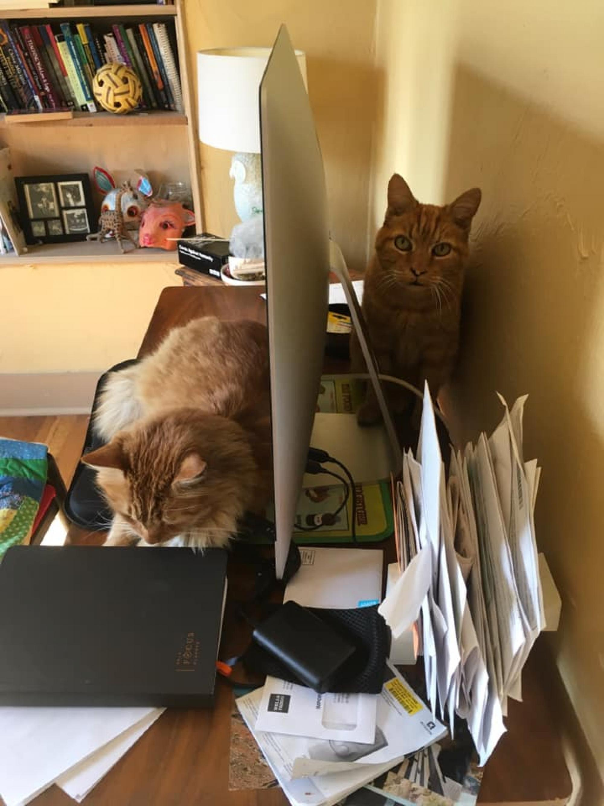 """My husband  and I both work in the English department, in the Foundations Writing Program. Our cats, Milagro and Remus, love to """"help"""" my husband in particular . Milagro is much more aggressive in his disruptions – he's lying directly on the keyboard here"""