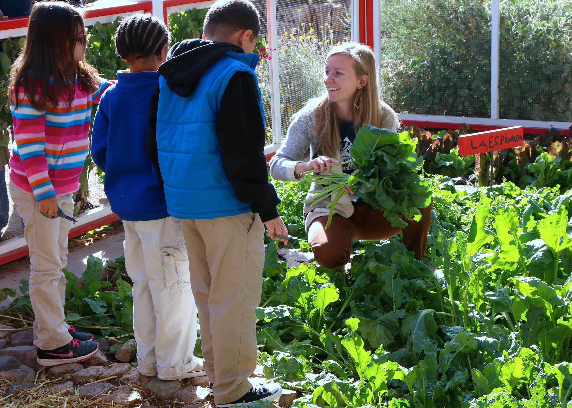 The UA is a top destination for students who want to learn about the connection among food, nutrition, society and health. Pictured is a UA student intern with the Community and School Garden Program, one of many hands-on opportunities for students who ar