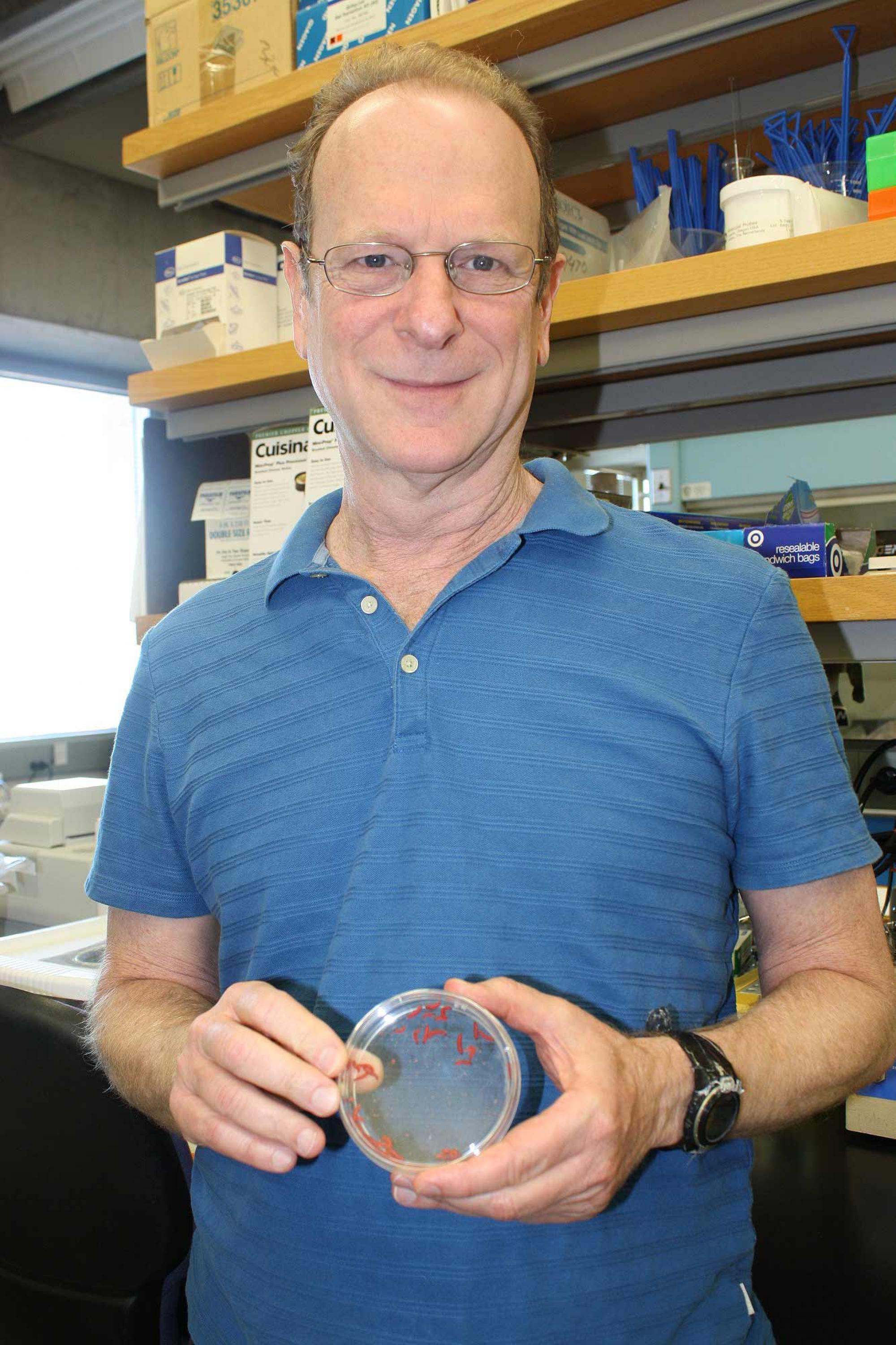 Bruce Tabashnik holds a petri dish with pink bollworm larvae.