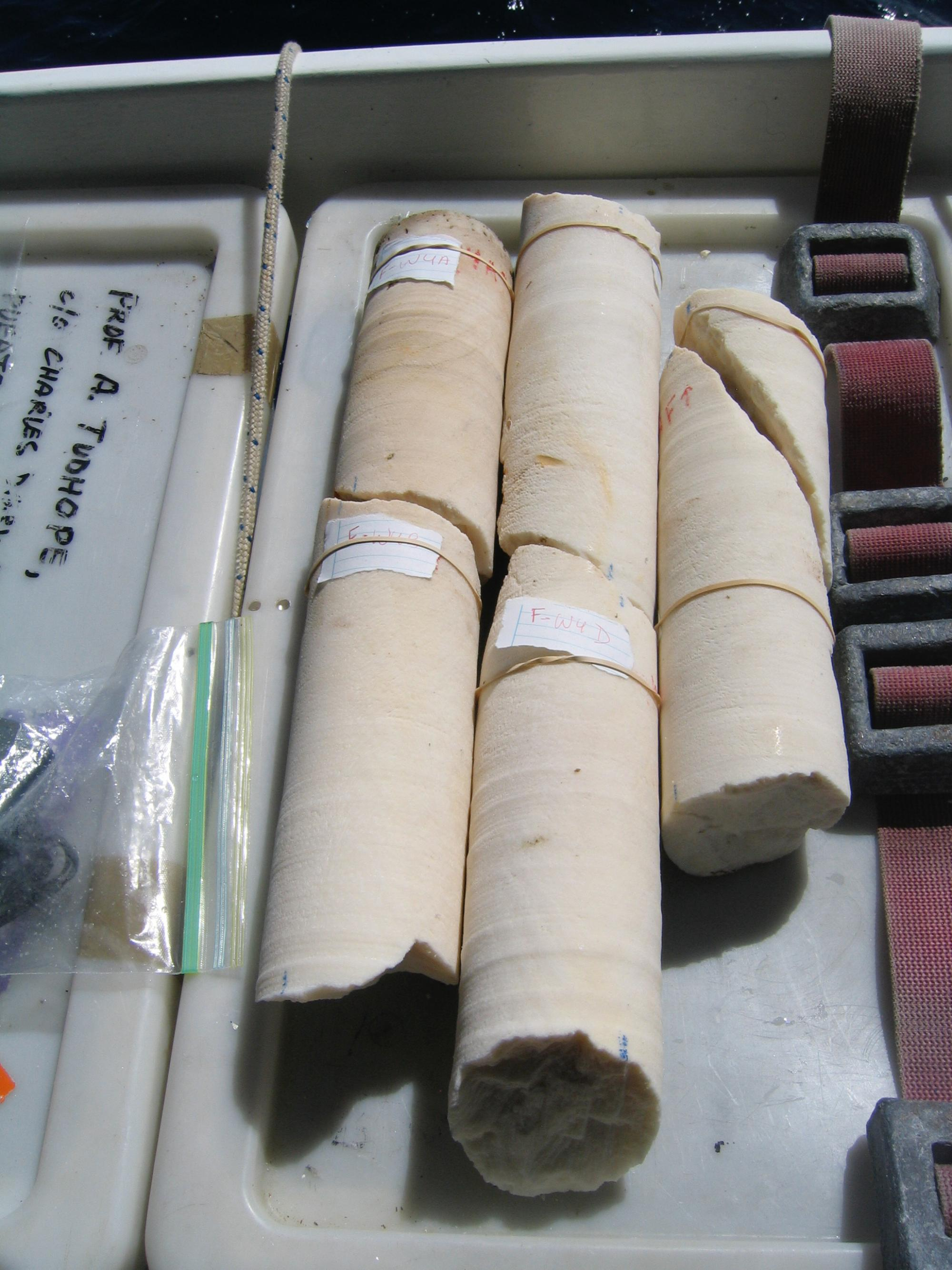 Cores collected in 2010 from a Porites lobate coral near Wolf Island in the Galápagos Islands. The core, now broken into three pieces, is 3.5 inches  in diameter.