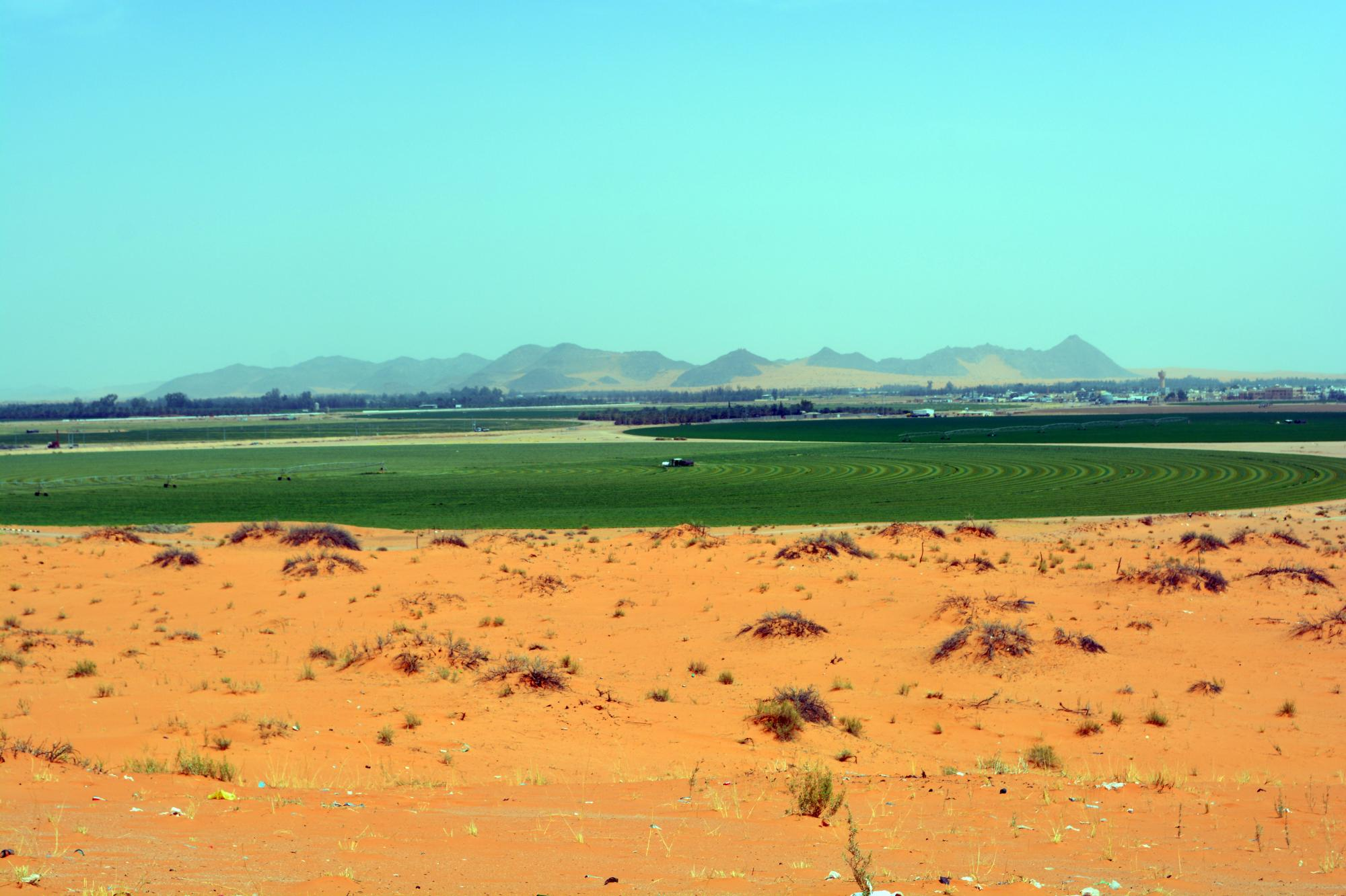 An alfalfa farm in Al-Khitah Village in Ha'il, Saudi Arabia, is cooperating with Ha'il University and the UA in using a mobile phone app providing same-day data on prices of farm produce in Hail and in the central agricultural auction markets in the kingd