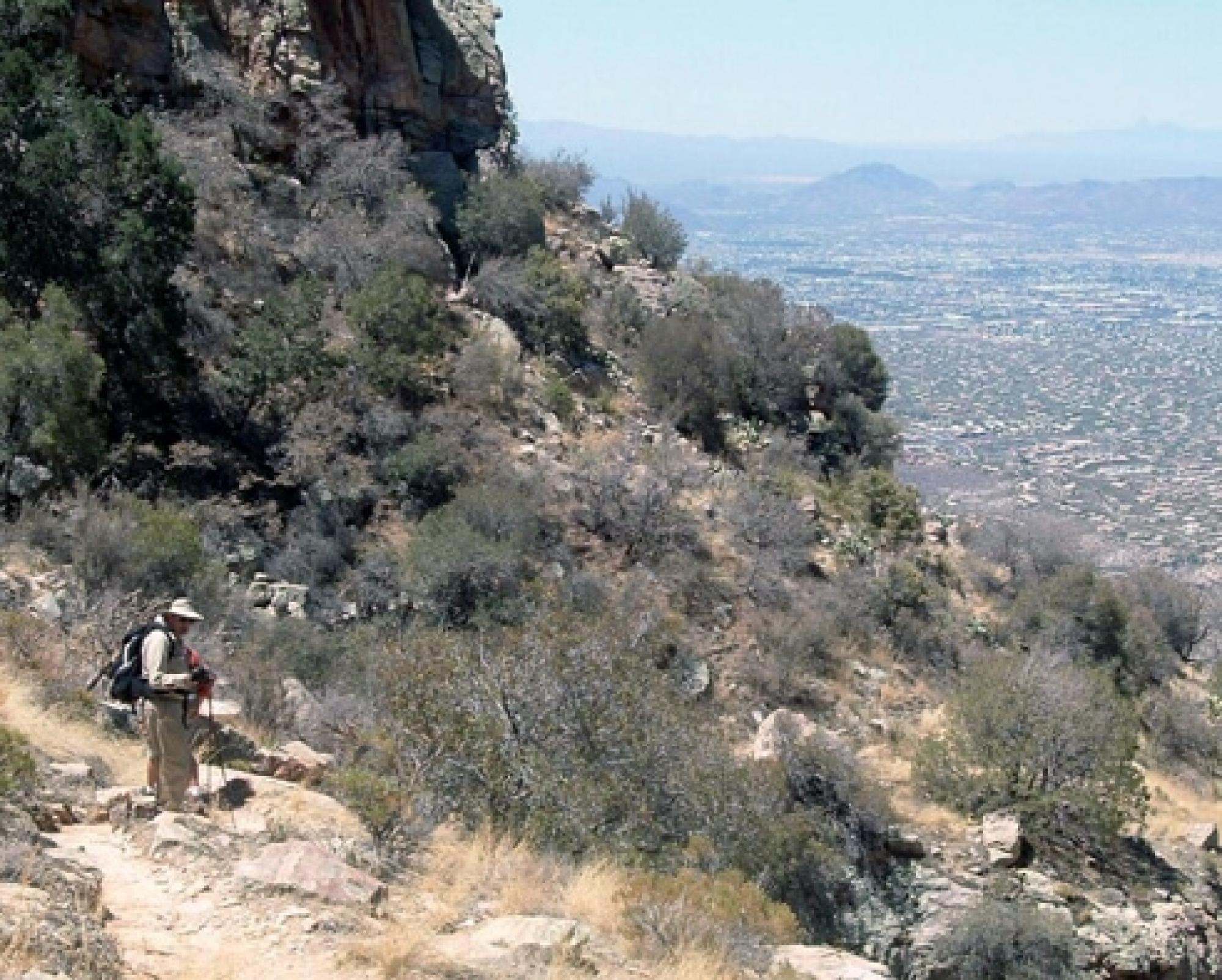 Dave Bertelsen hikes Finger Rock trail in the Santa Catalina Mountains. Tucson, Arizona can be seen in the valley below. Bertelsen has been hiking the trail and recording the locations of plants in bloom for more than 25 years.