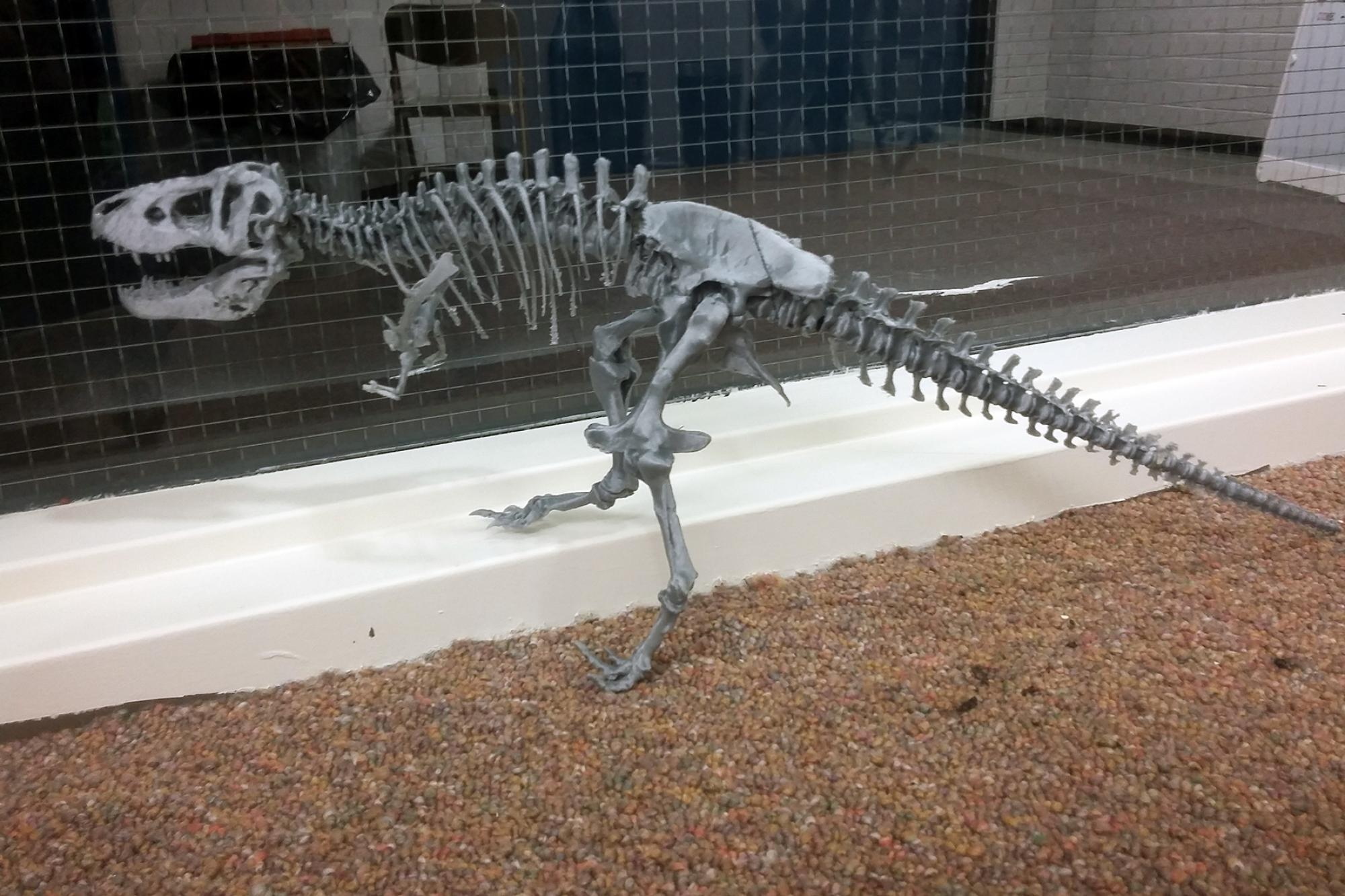"""A 3-D dinosaur skeleton is just one of the items """"manufactured"""" in the 4-H Fab Lab."""