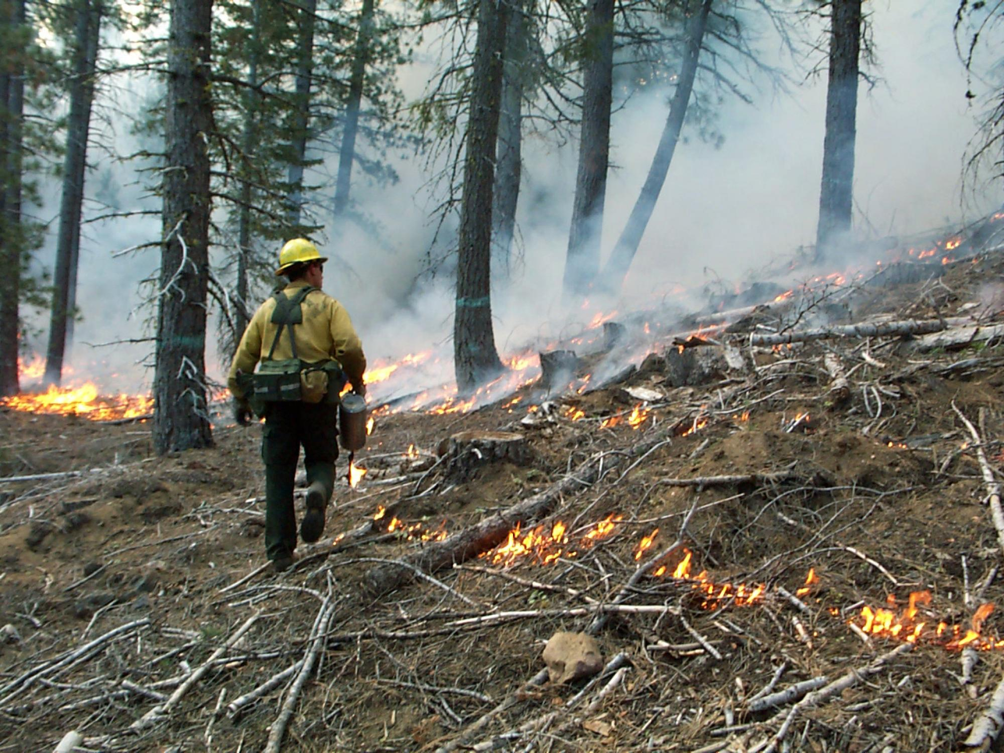 A U.S. Forest Service fire professional uses a drip torch to light a low-severity prescribed burn to reduce the fuel load in a mixed-conifer forest in the Goosenest Adaptive Management Area in northern California.