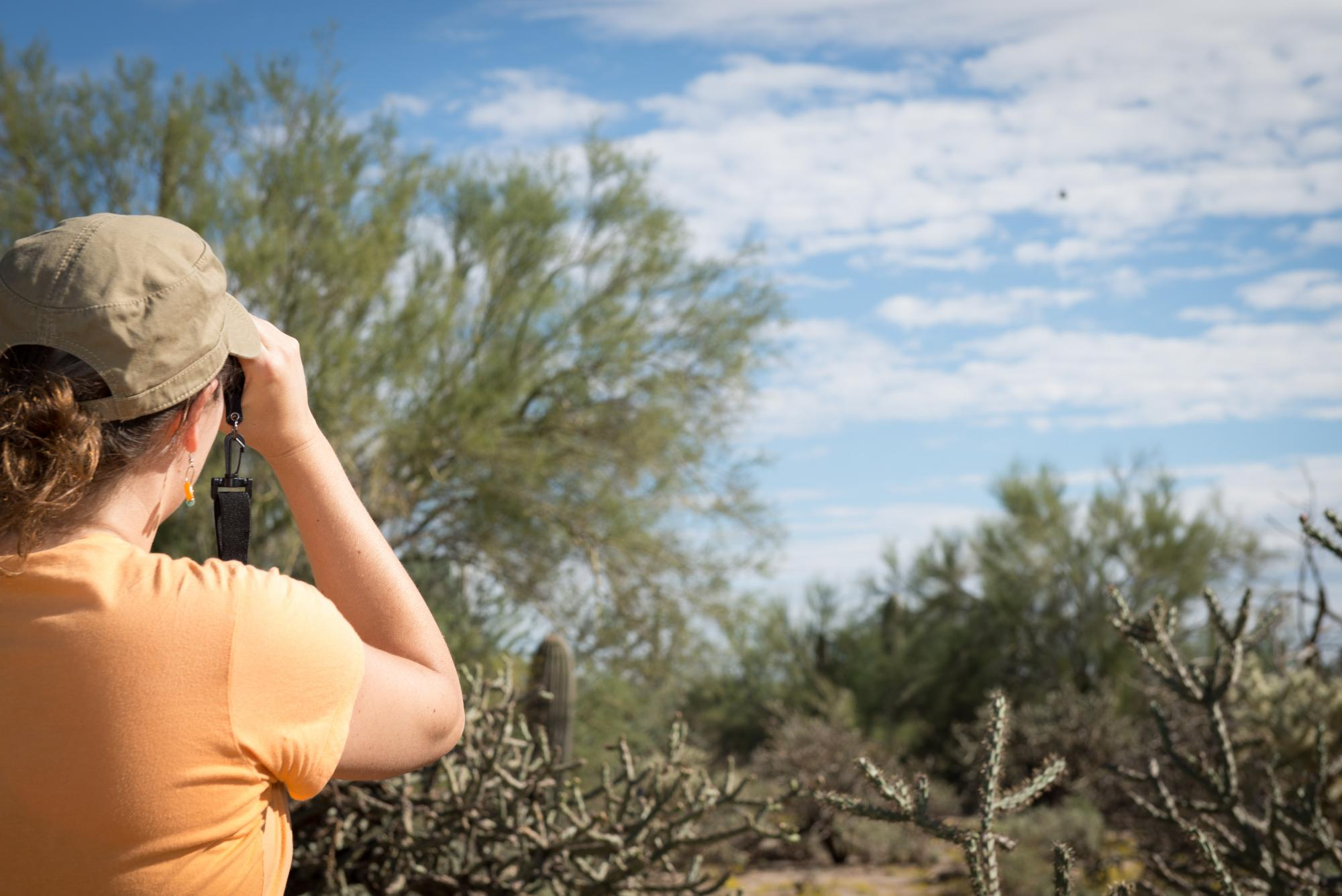 Observers track saguaros, palo verde trees, cactus wrens and hummingbirds at the Mason Audubon Center in Tucson.