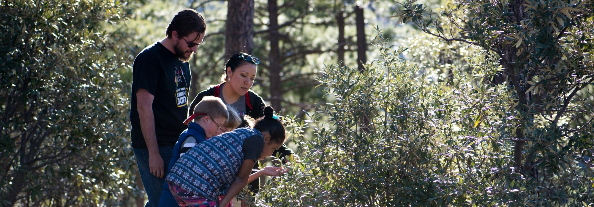 A family observes oak leaf phenology in Arizona.