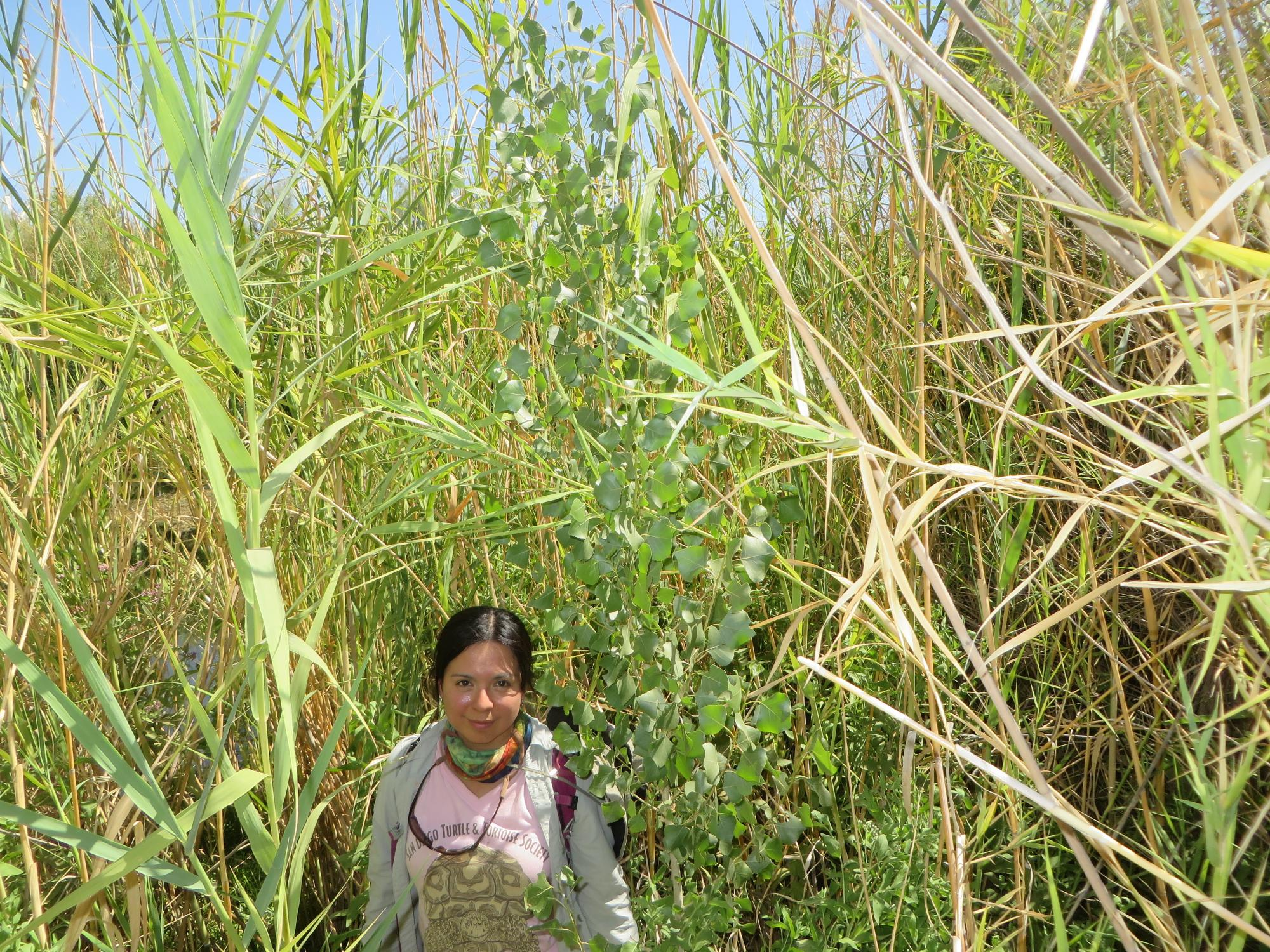 Martha Gómez Sapiens, a monitoring team member and postdoctoral research associate in the UA Department of Geosciences, stands on a riverbank next to willows and cottonwoods that germinated as a result of the pulse flow.