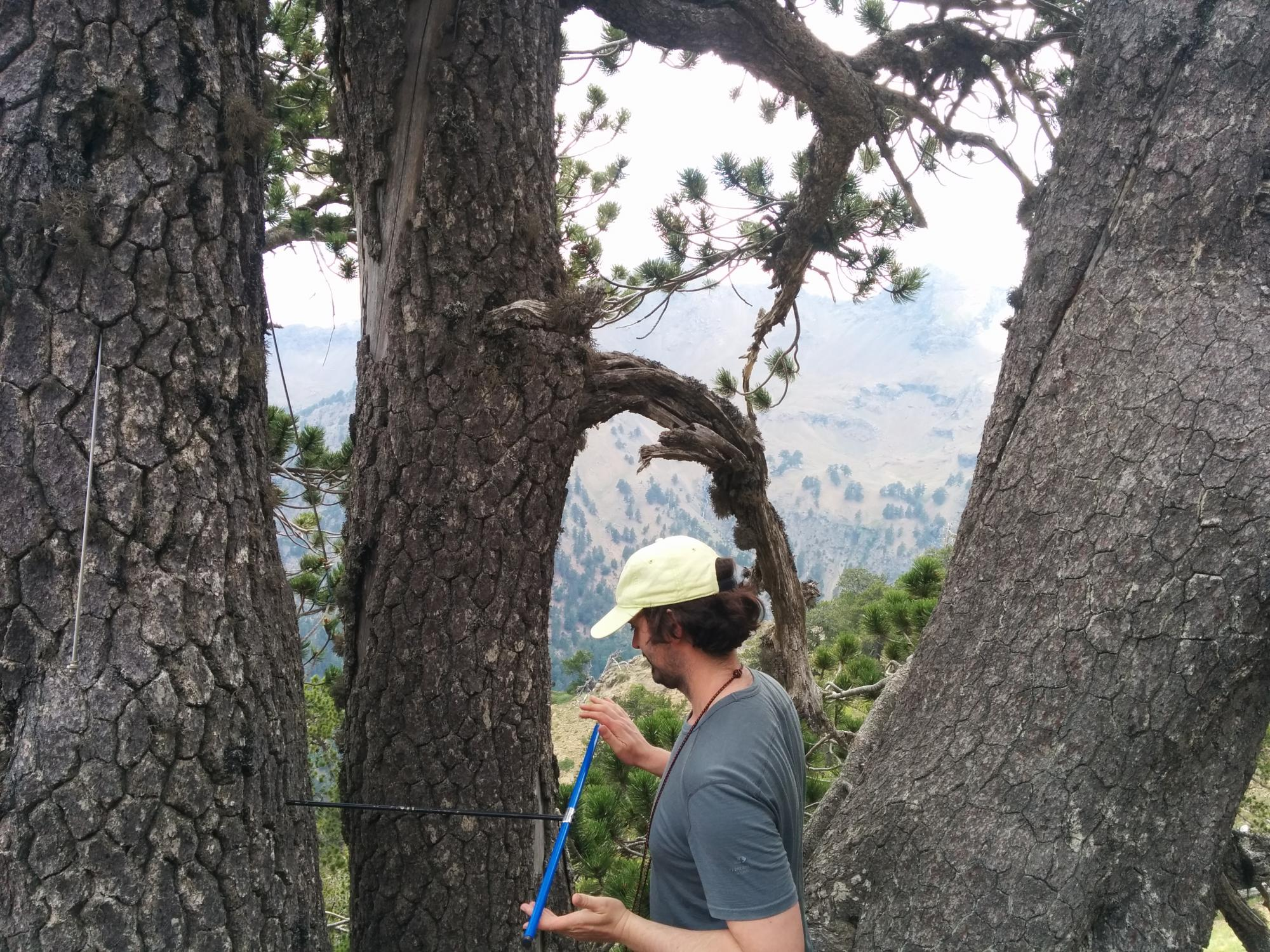 UA geosciences doctoral student Matthew Meko cores a Bosnian pine. He was part of the 2016 expedition that determined that a Bosnian pine is the oldest known living tree in Europe.