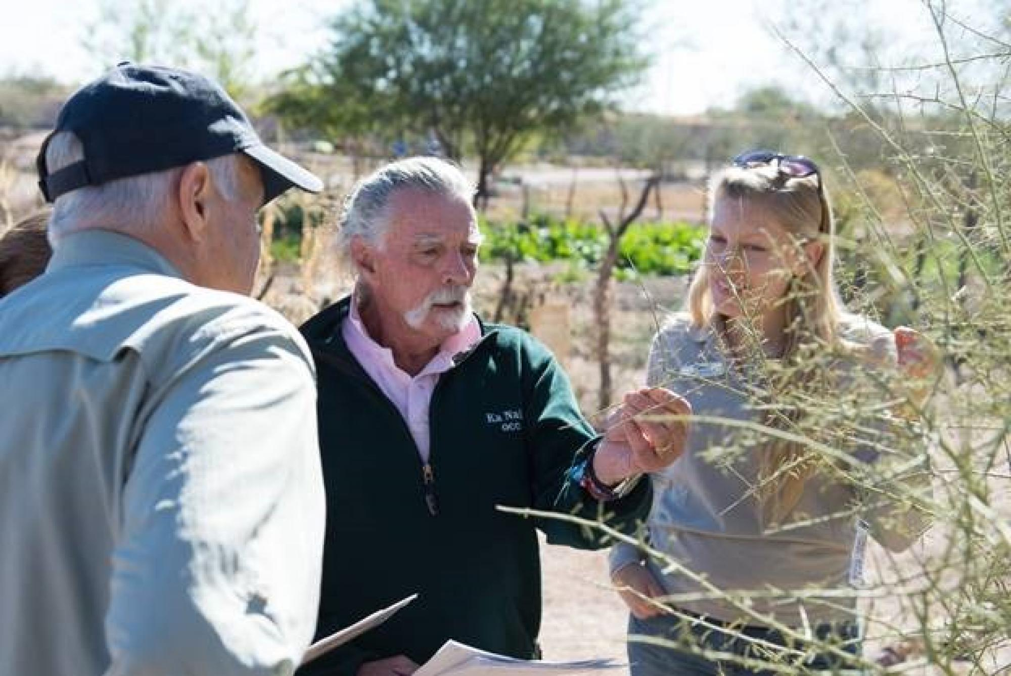 At the Tucson Mission Gardens, Nature's Notebook observers Jim Love  and Hank Verbais  learn to appreciate changes in the plants they observe, such as young leaves on the palo verde tree. Erin Posthumus , outreach coordinator with the National Phenology N
