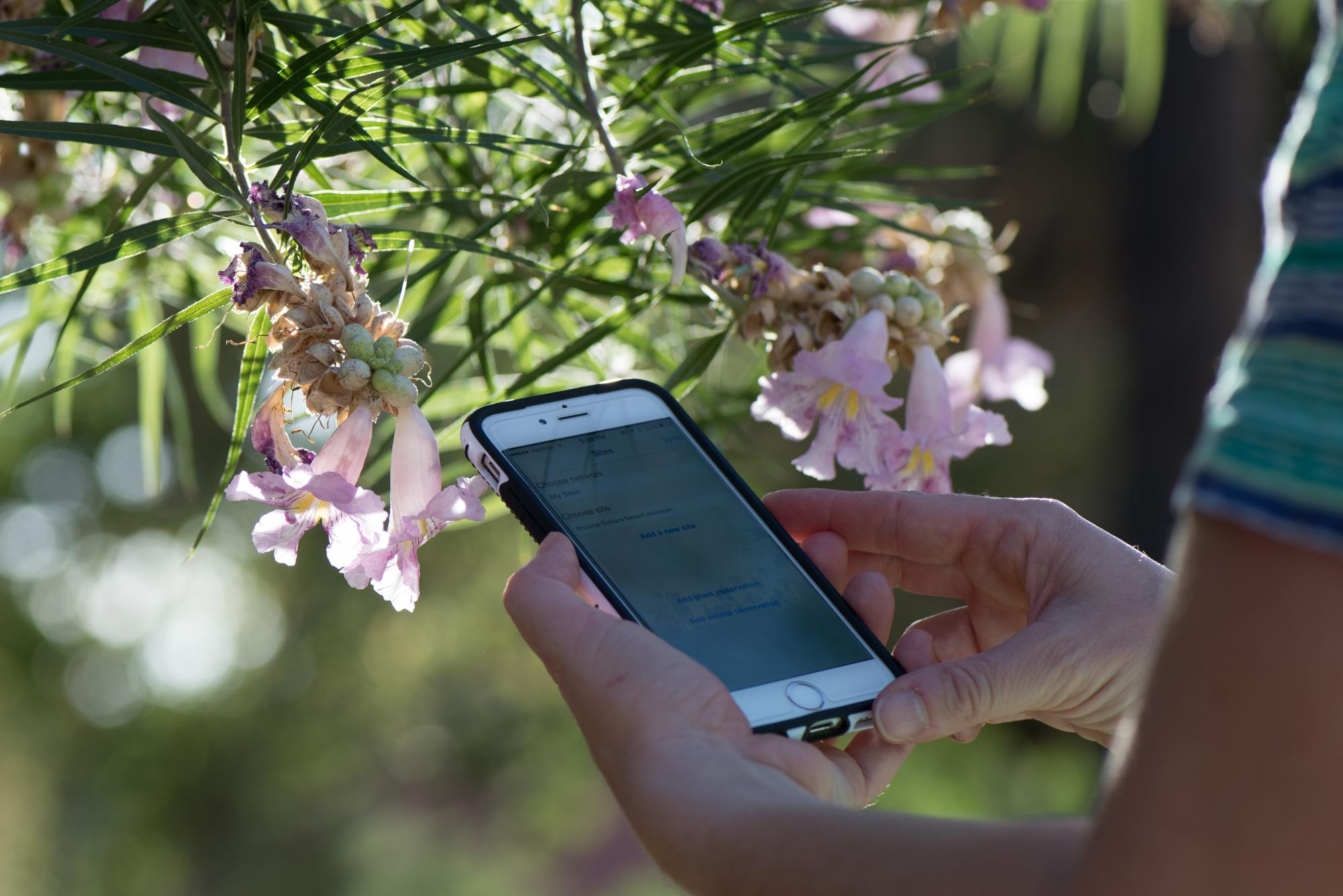 The Nature's Notebook app makes submitting data to the national database easy.