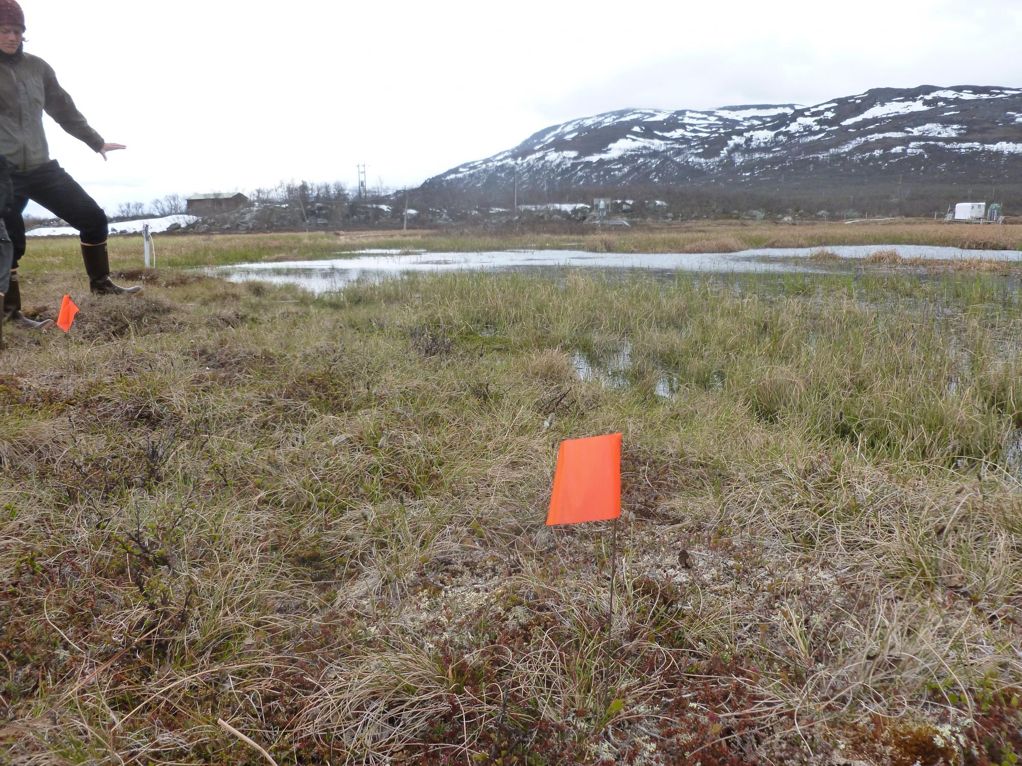 Flags are placed to designate sampling locations at the field site in Sweden. Rose Vining is working with Moira Hough  as part of a research team investigating permafrost, which is thawing under the effect of a changing climate.