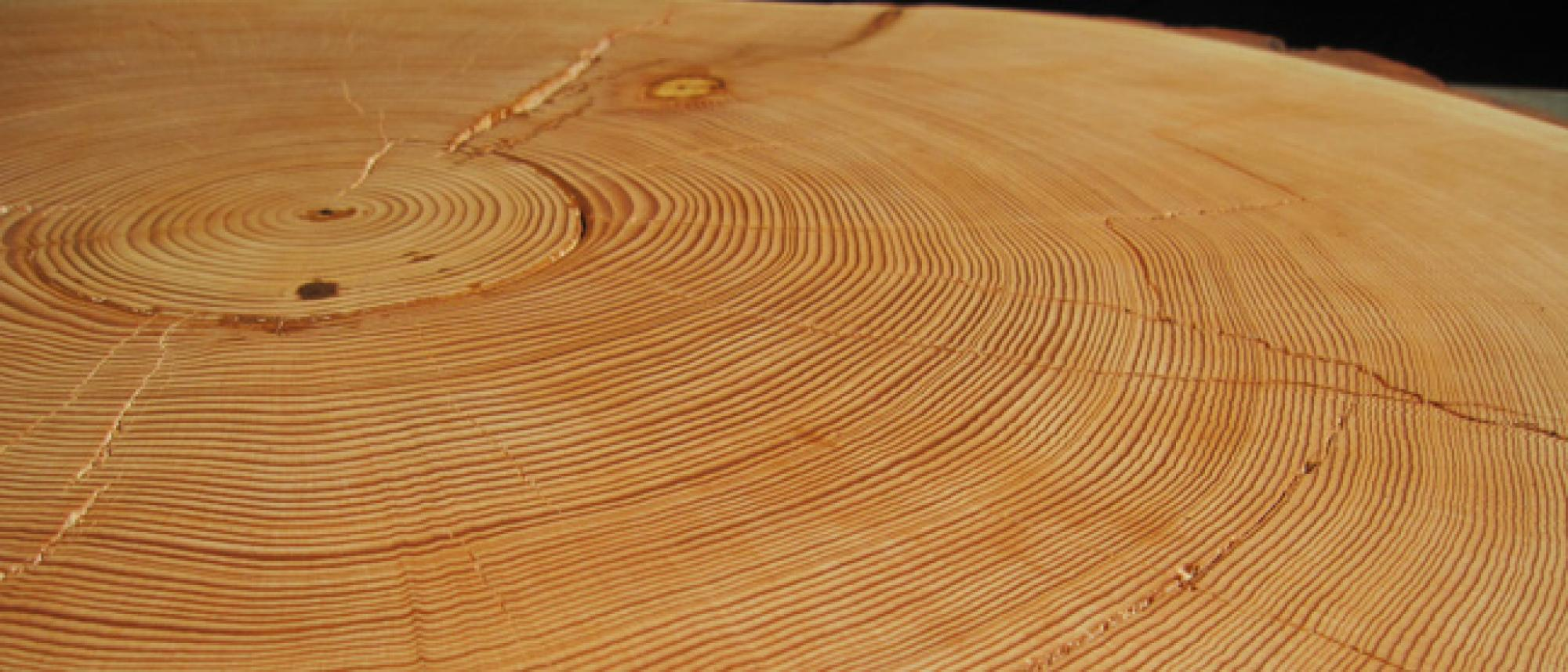 Annual tree rings record a detailed history of drought  and wetness . This sample from a dead Douglas fir tree in the Santa Catalina Mountains near Tucson, Ariz., has nearly 400 rings and dates back to the year 1600. Stress cracks, visible in the foregrou