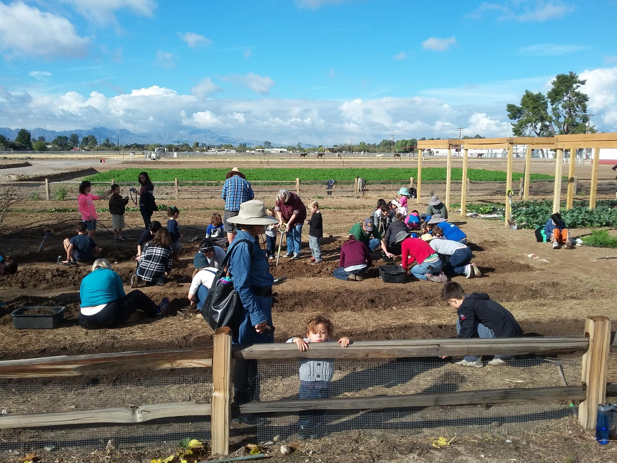 Tucson Village Farm offers year-round, hands-on programs for youth of all ages. The farm, at 4210 N. Campbell Ave., serves as a safe urban location for youth to be outdoors and engage in physical activity while contributing to and participating in local f