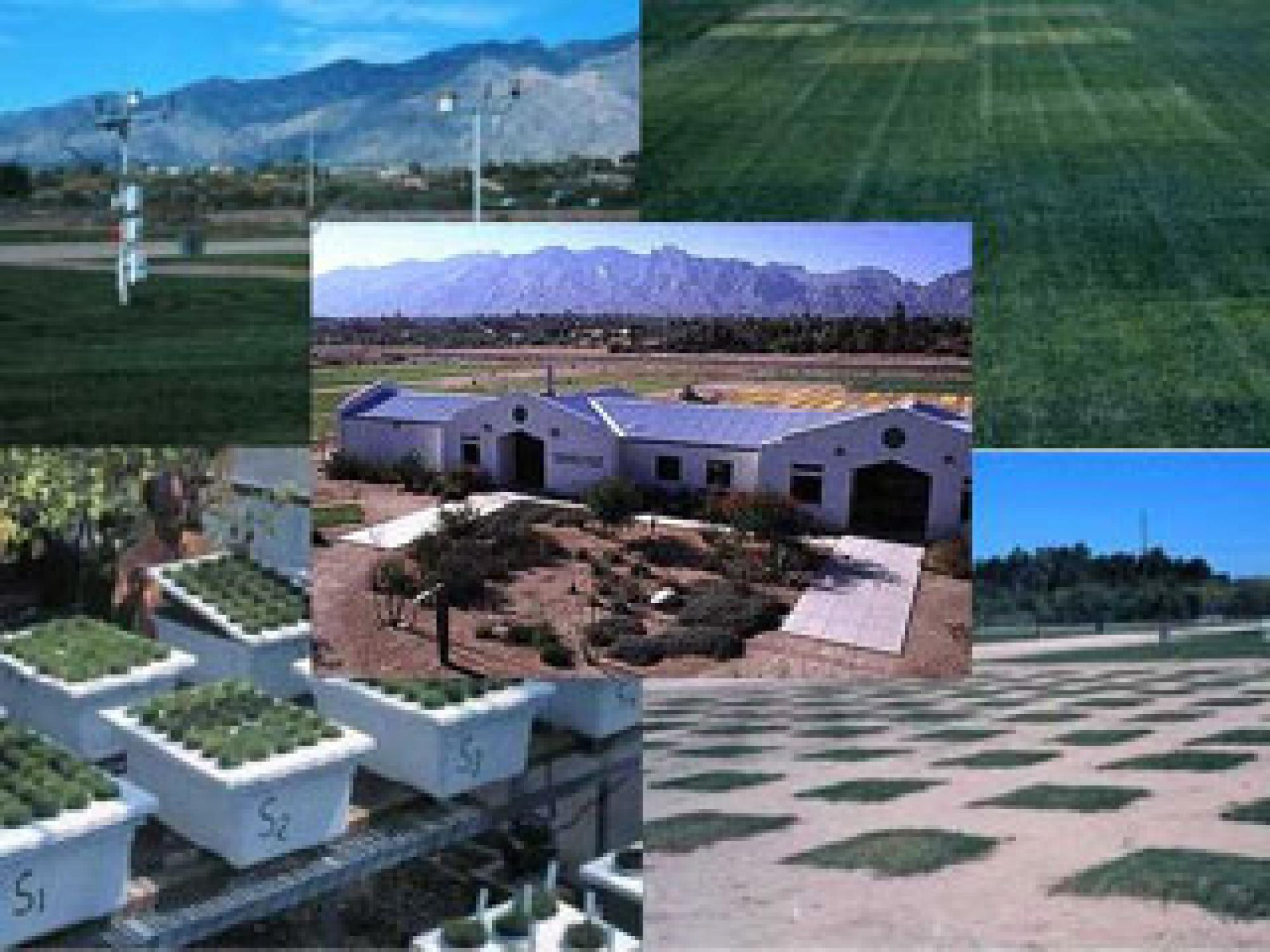 Irrigation deficit study: Seven types of salt-tolerant, low-desert-adapted grasses are grown with descending amounts of water at the Karsten Turfgrass Research Facility to determine the effect of water stress on turf quality.