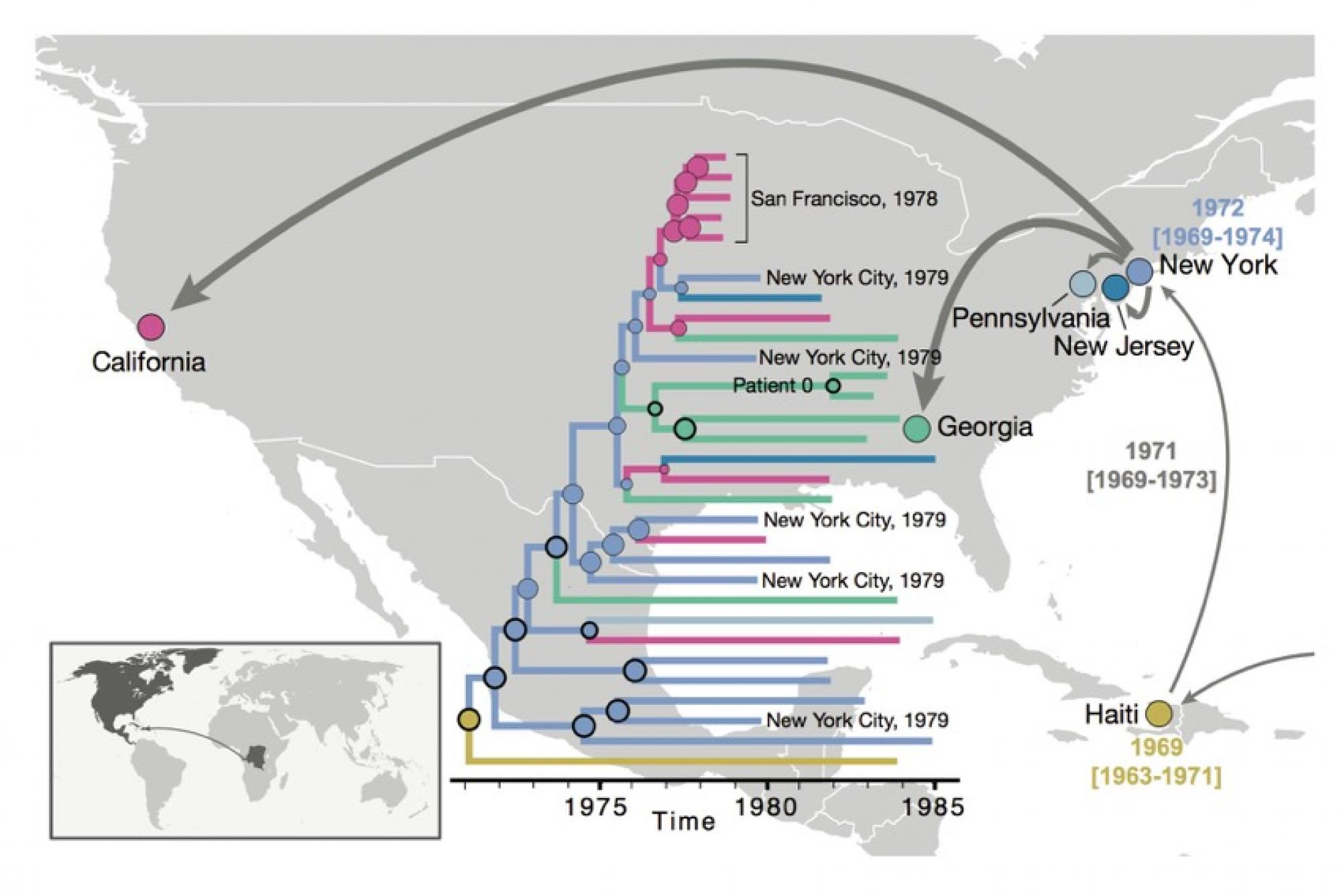 After HIV moved from Africa to the Caribbean, it first spread to New York and subsequently to different locations in the U.S. By constructing evolutionary trees of the various HIV strains as far back as the 1970s, the researchers found evidence that the v