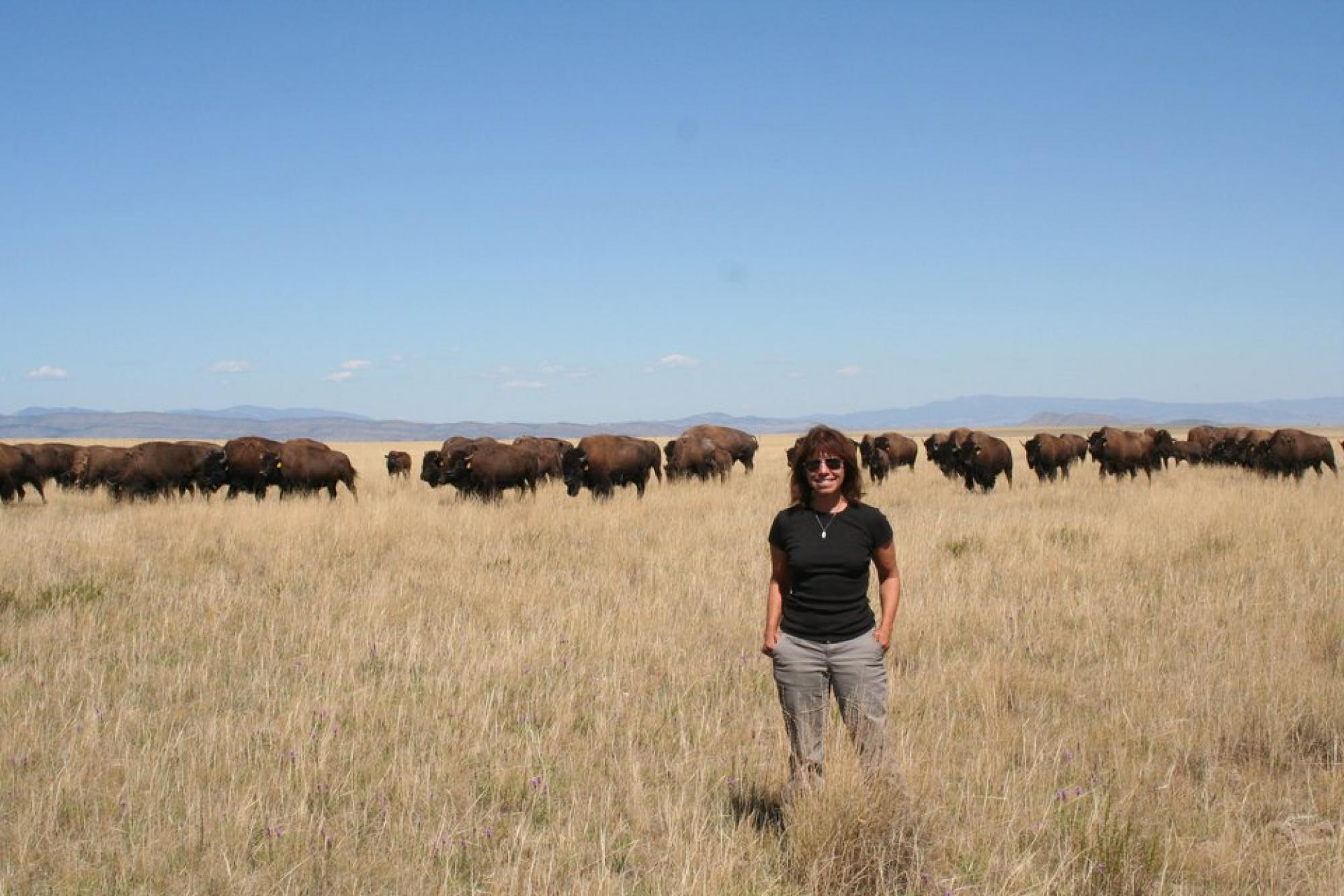 UA anthropologist María Nieves Zedeño stands before a growing herd of buffalo on the Blackfeet Reservation in northern Montana.