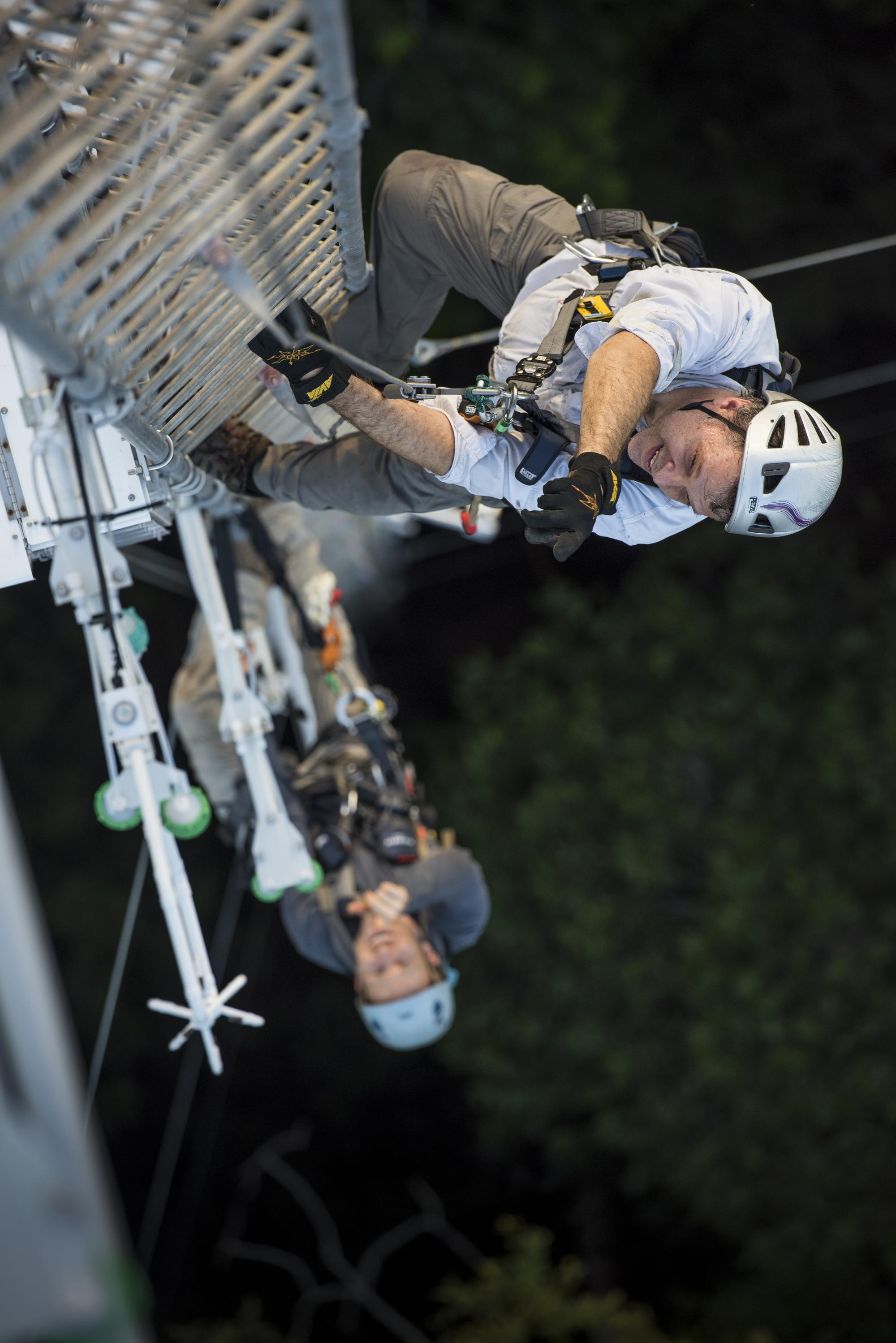 High above the rainforest canopy, UA scientists Scott Saleska  and Neill Prohaska, a UA doctoral student, ascend a 220-foot-tall flux tower in the middle of their study site. Sensors on the tower measure the carbon dioxide and water vapor that flow into a