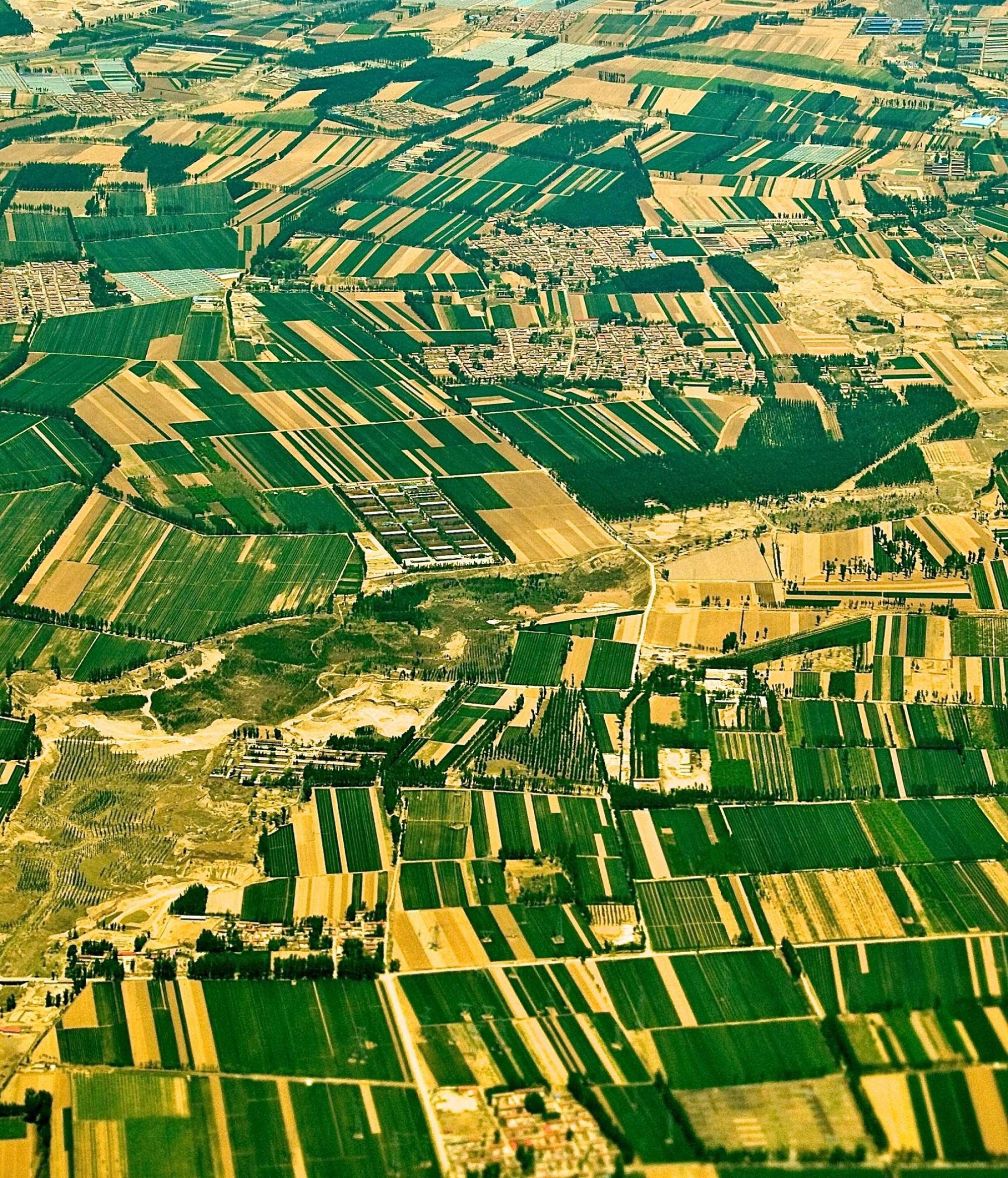 """The 30 million hectares of small farms in northern China include a patchwork of fields planted with cotton genetically engineered to produce an insect-killing protein and """"refuges"""" of other crops that do not make such proteins."""
