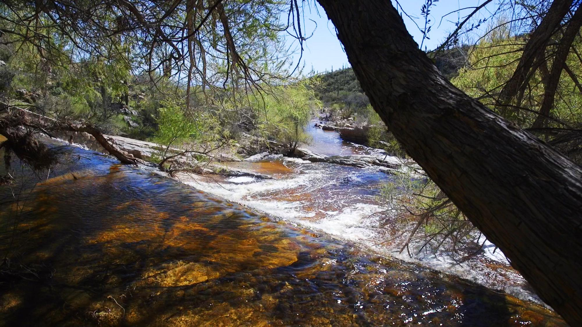 Similar to the Himalaya region, winter precipitation is an important source of water for the Southwestern U.S. Recent snowfall and rain resulted in water flowing over the Sabino Dam in March, creating a seasonal reservoir above Sabino Creek.