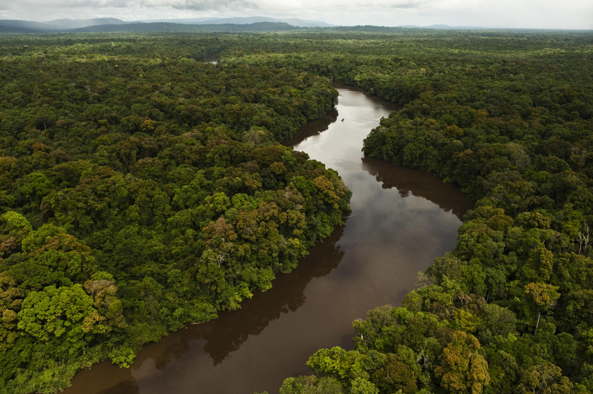 The Essequibo River, the longest river in Guyana and the largest river between the Orinoco and Amazon, rises in the Acarai Mountains near the Brazil-Guyana border and flows to the north for more than 600 miles through forest and savanna into the Atlantic