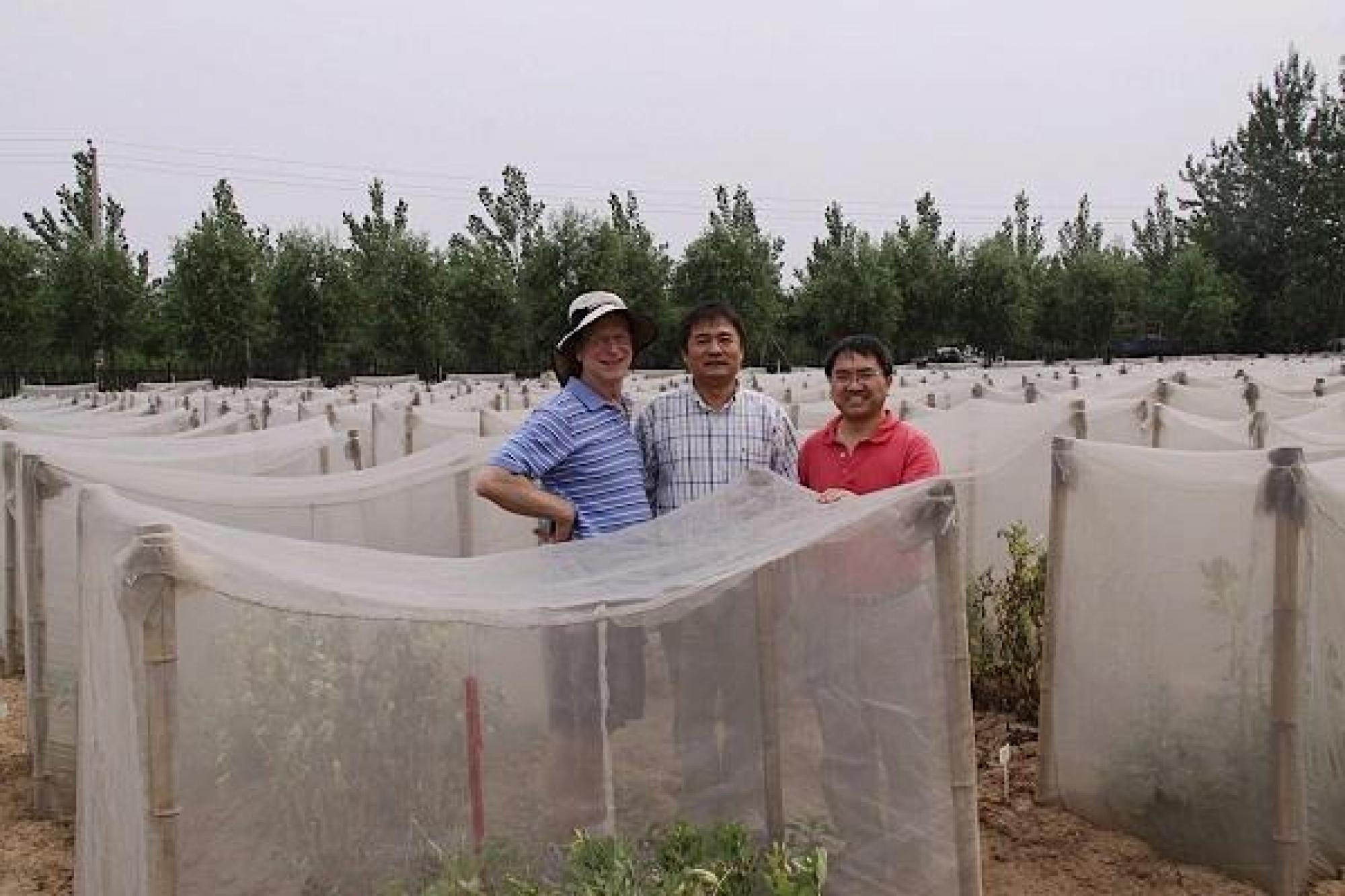 Bruce Tabashnik , Kongming Wu  and Xianchun Li  check field experiments at the Lang Fang Experiment Station of the Chinese Academy of Agricultural Sciences.