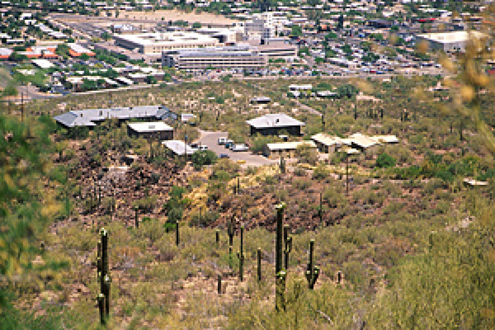 Botanists have been documenting saguaro growth at plots on the Desert Laboratory, pictured above, for more than 90 years.