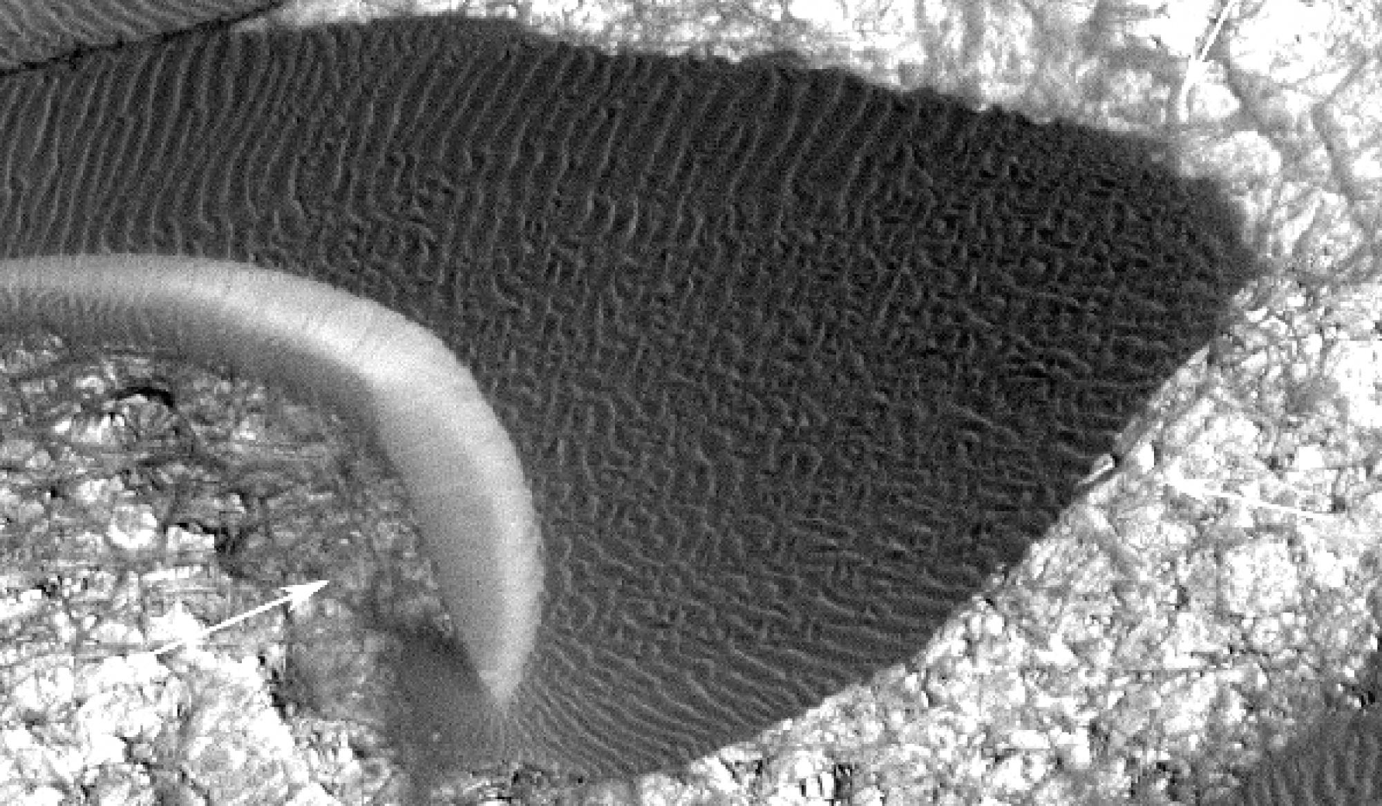 Sand ripples on a Martian dune.