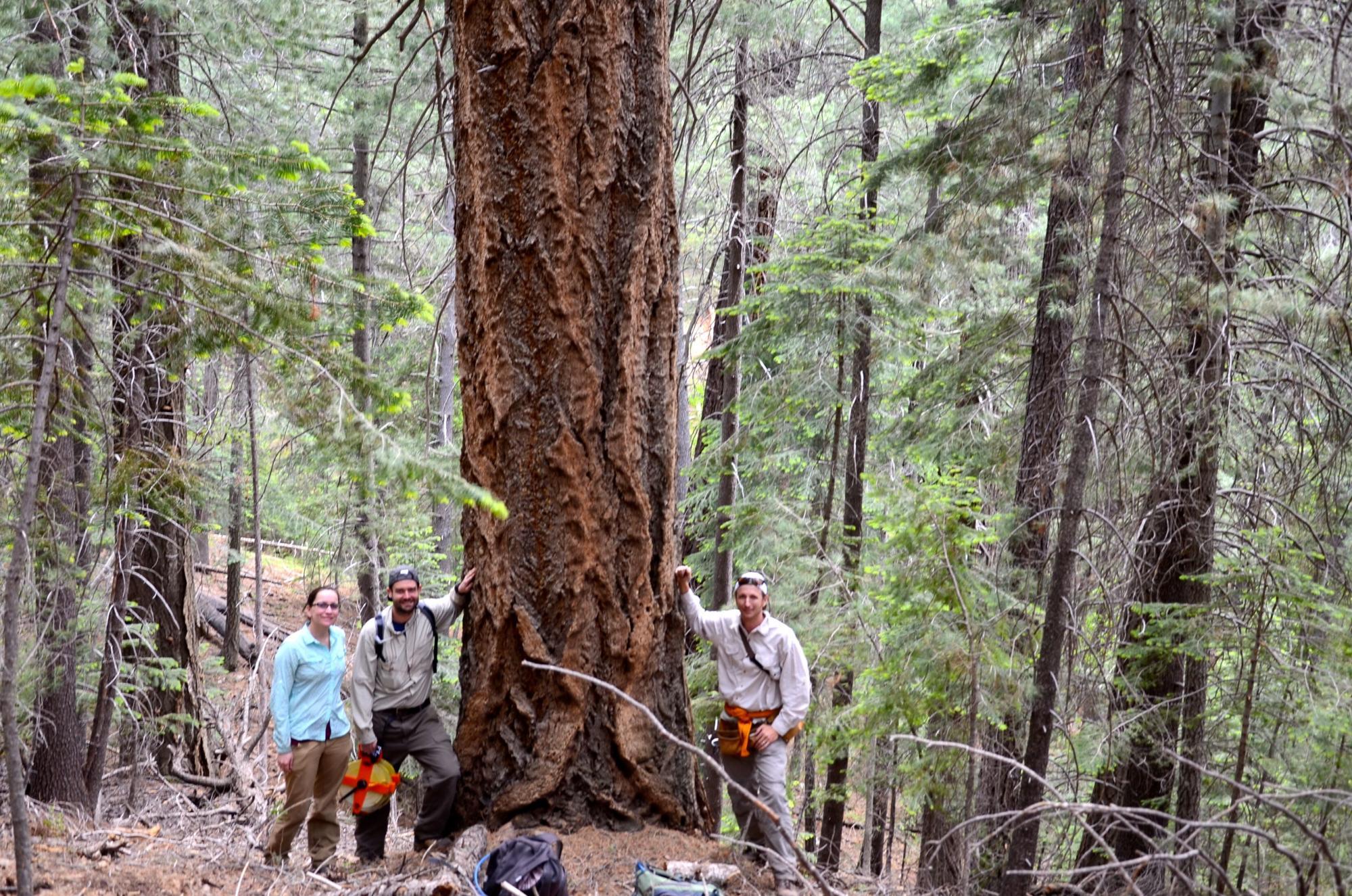 Vanessa Buzzard, Sean Michaletz and Brian Enquist collecting data on Mount Lemmon.