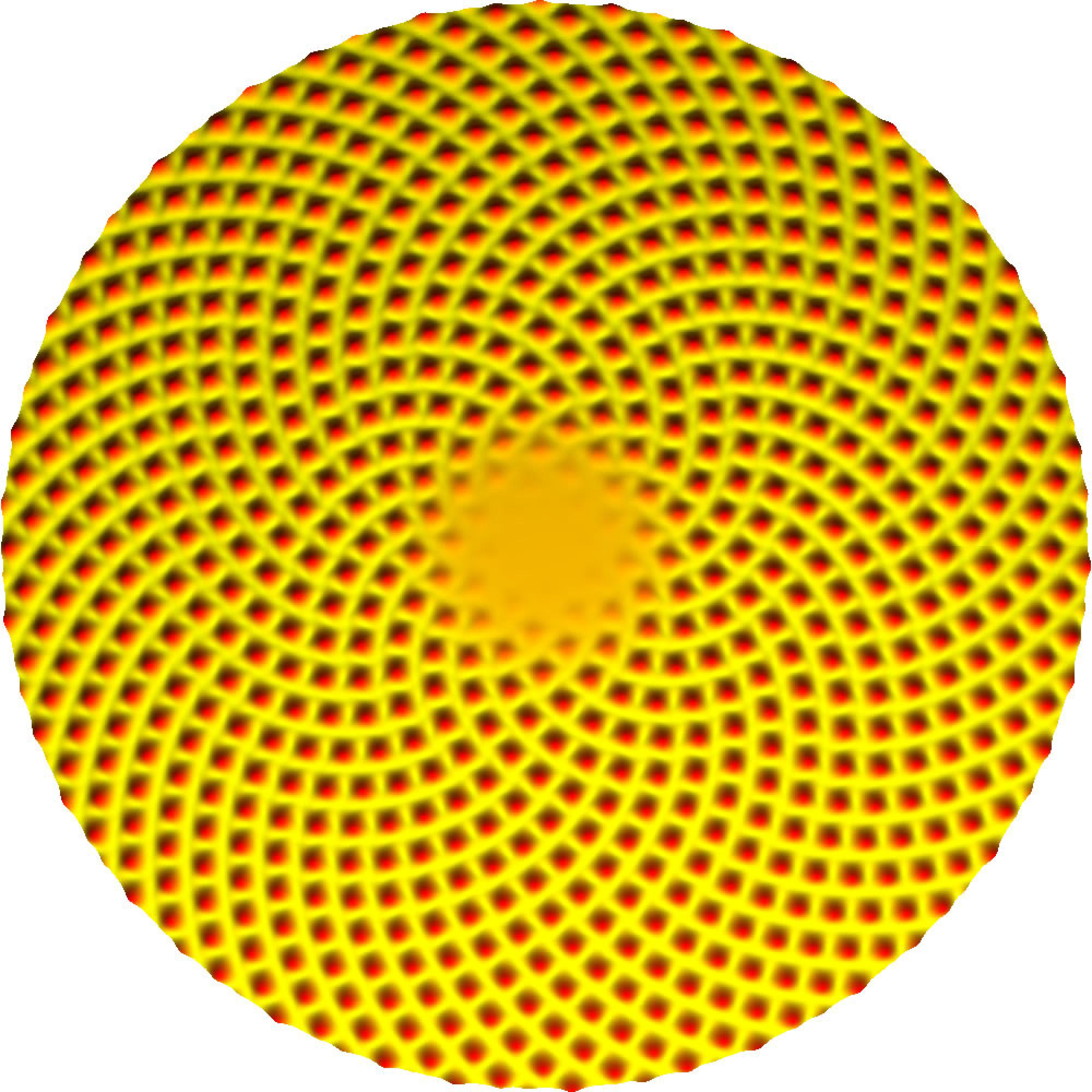 This image shows the pattern on the head of a sunflower as generated by a mathematical model of plant growth.