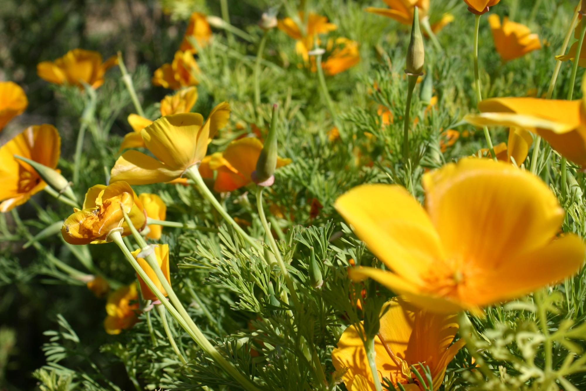 The Xerces Society reports that bumblebees, key pollinators of crops and wildflowers, are declining at an alarming rate.