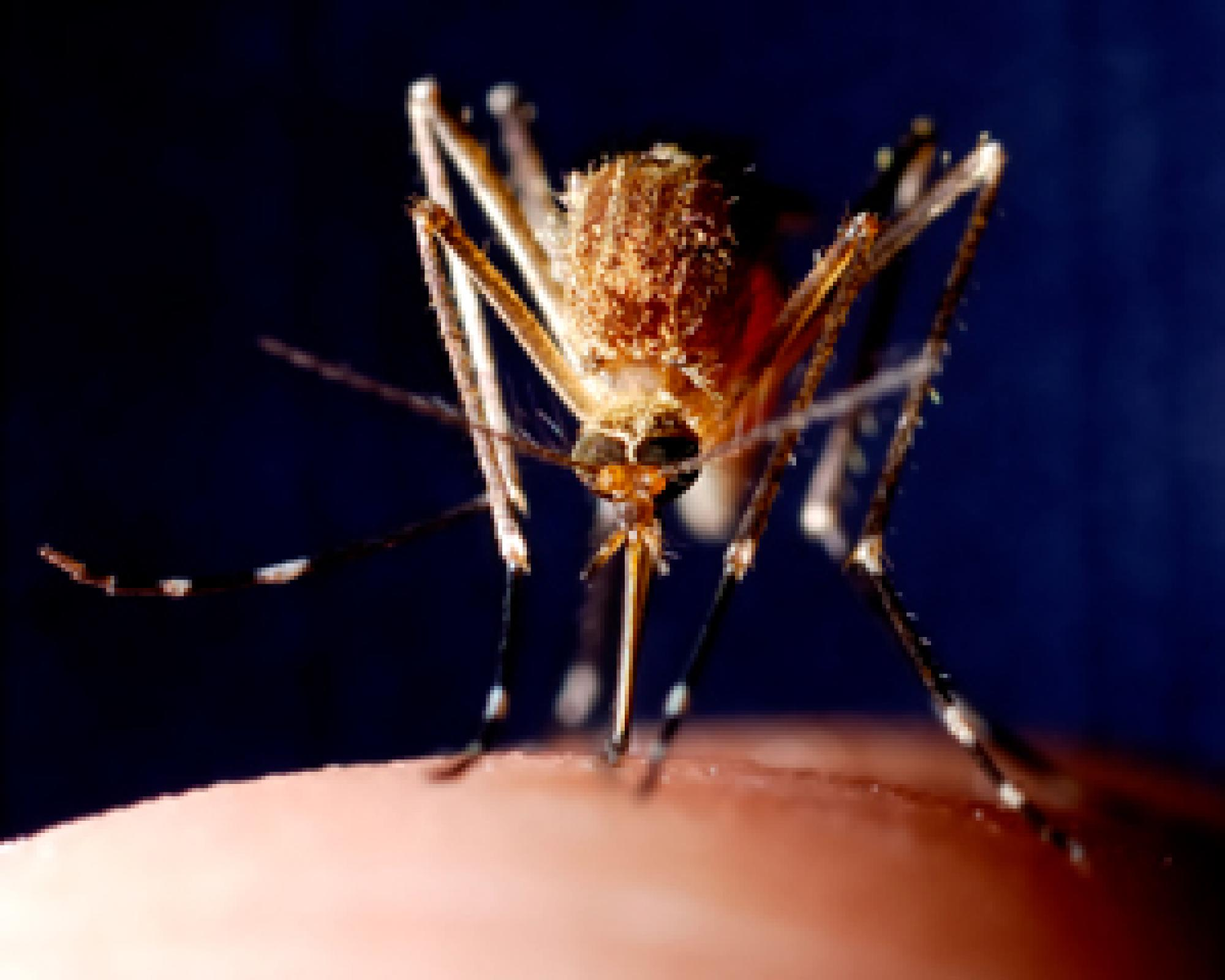 A team of UA researchers will gather data from sampling mosquito populations and also use surveys and high resolution urban-scale modeling, among other resources, to improve what is known about the ecological mosquito system. The team intend to develop ma