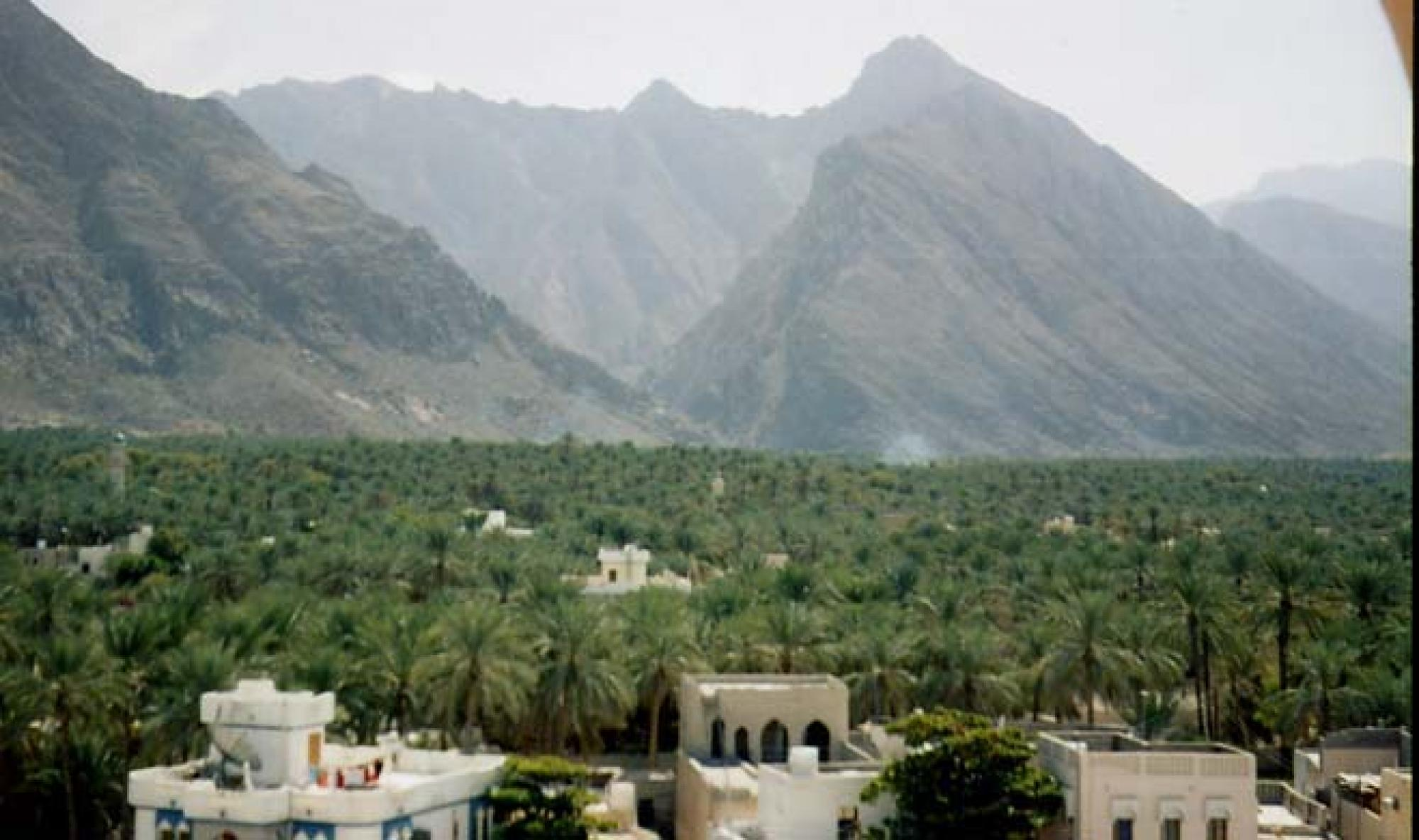 A date palm tree farm in Oman.