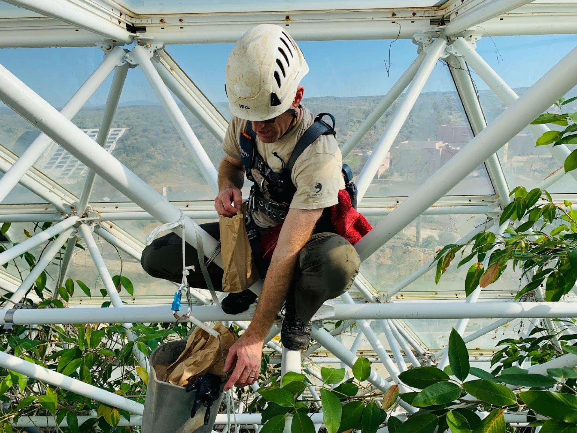 Jason Deleeuw, Biosphere 2 rain forest manager, climbs the space frame above the rain forest floor to collect leaves and samplers placed overnight to link leaf climate, microbiome and volatile organic compound emissions.