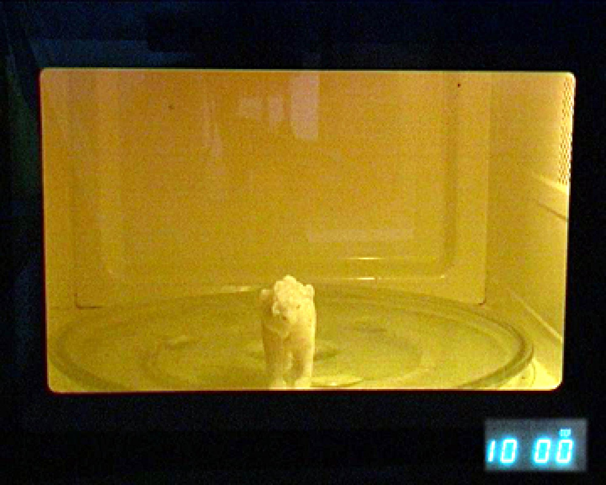A polar bear popsicle, or 'polarsicle,' created from a mold made by fine arts graduate student Chika Matsuda, awaits its fate in a microwave oven. Matsuda will dispense polarsicles at the Biosphere 2 Earth Day Festival as an activity to provoke 'fast food