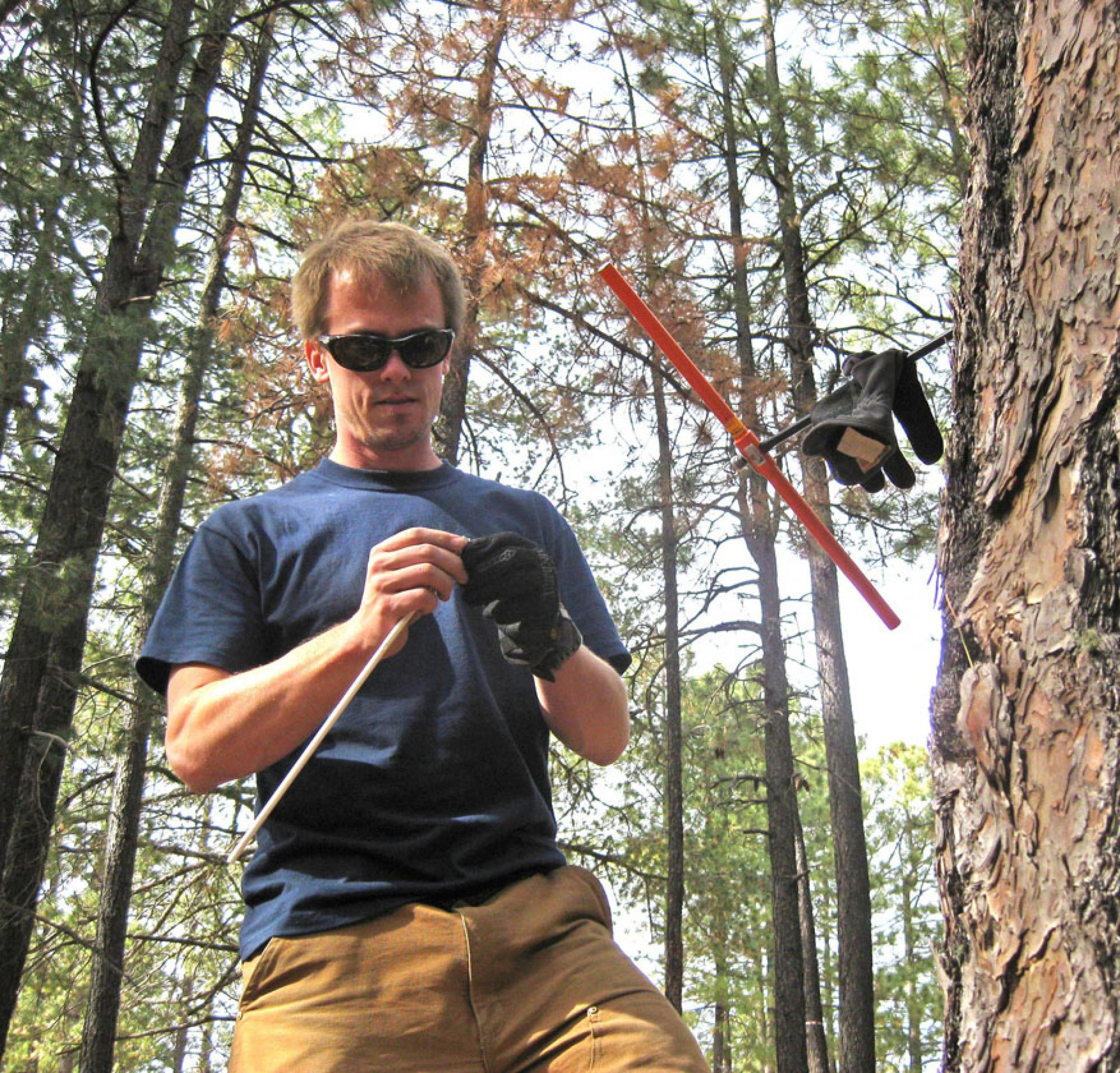 UA tree-ring researcher Daniel Griffin collects a core from the trunk of a ponderosa pine to study the tree's annual growth rings. He measures the width of such rings to study the monsoon rainfall history of the America Southwest.  Scott St. George/Univer