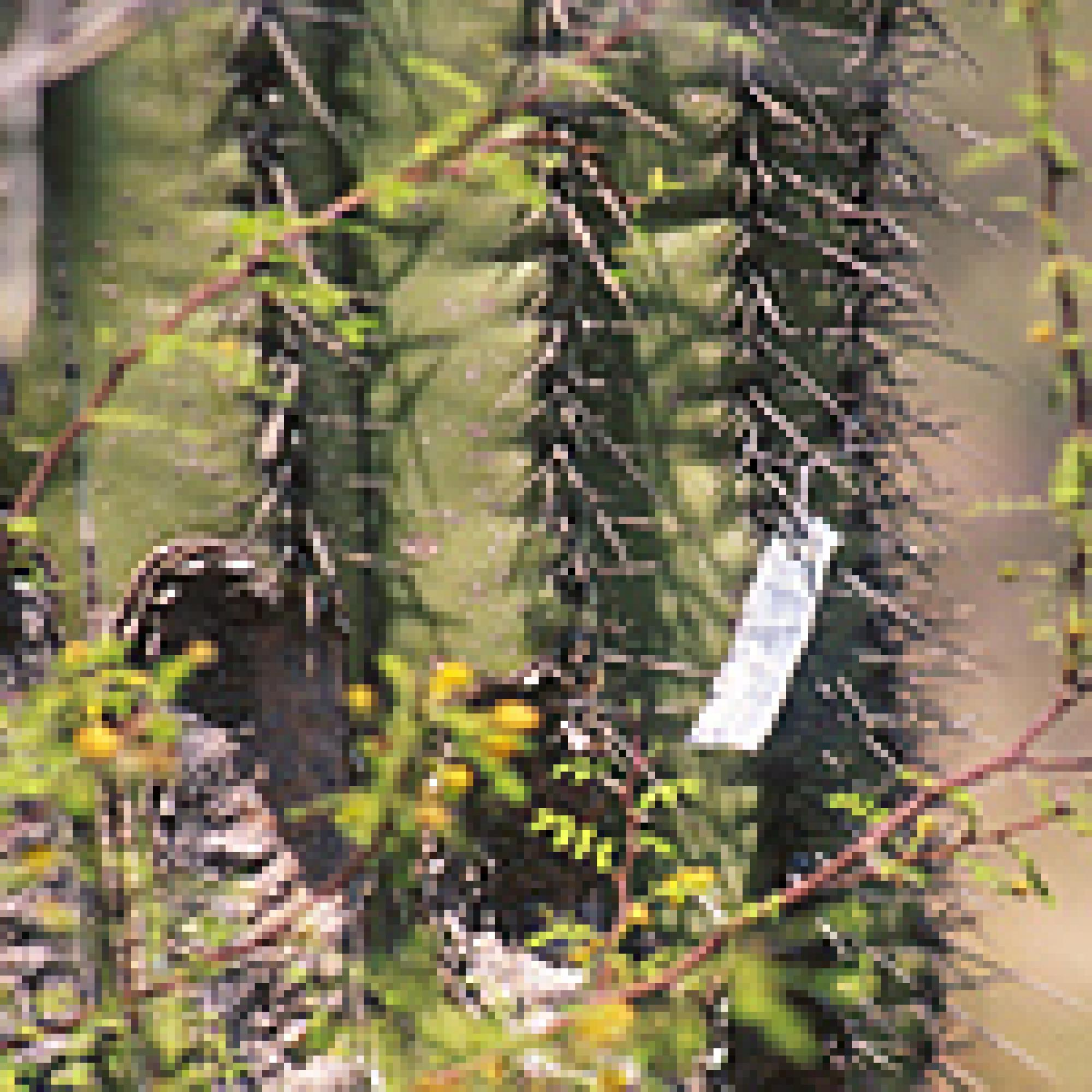 Tagged saguaro, Desert Laboratory