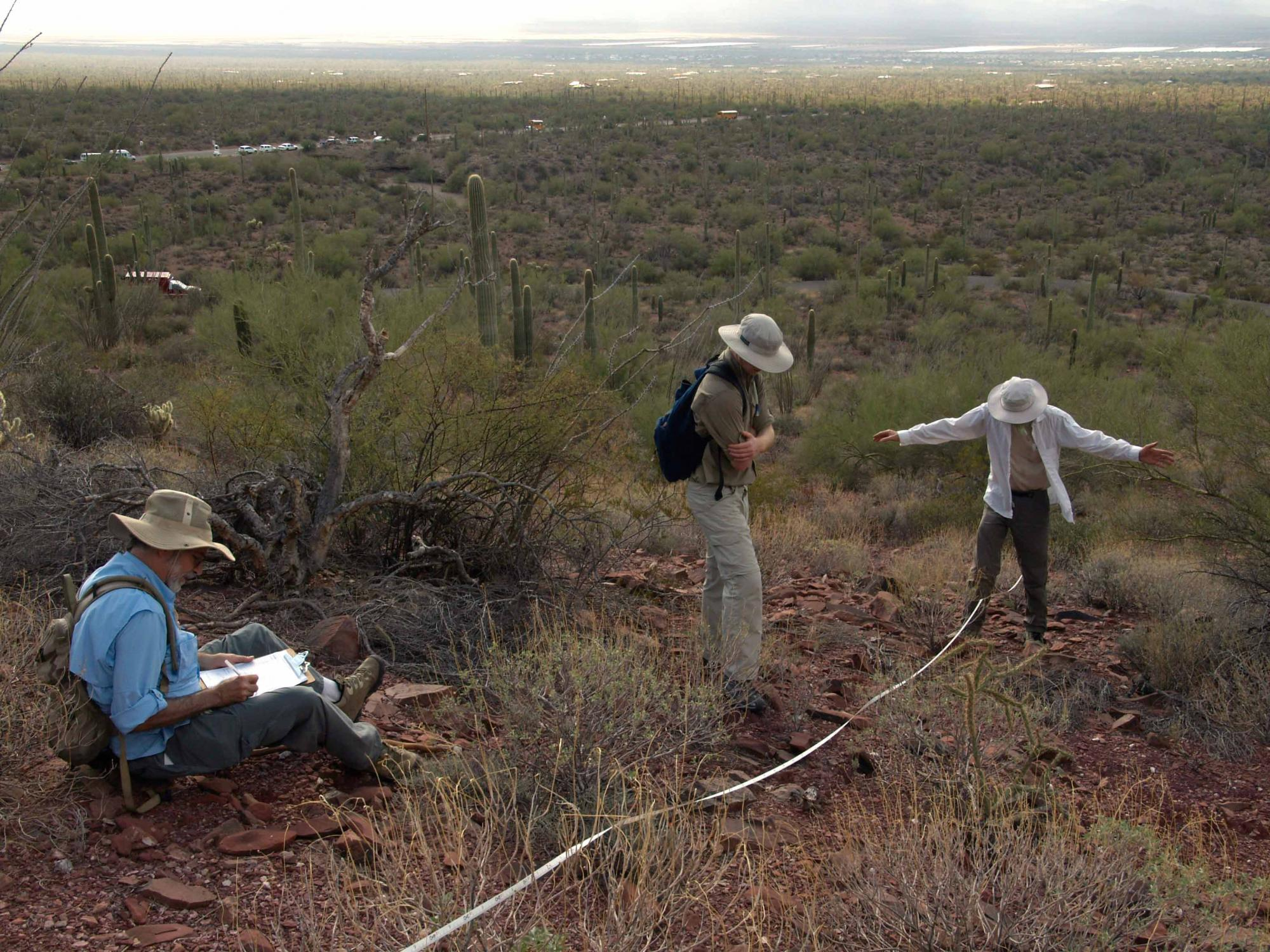BioBlitz volunteers record plants growing along a transect line.