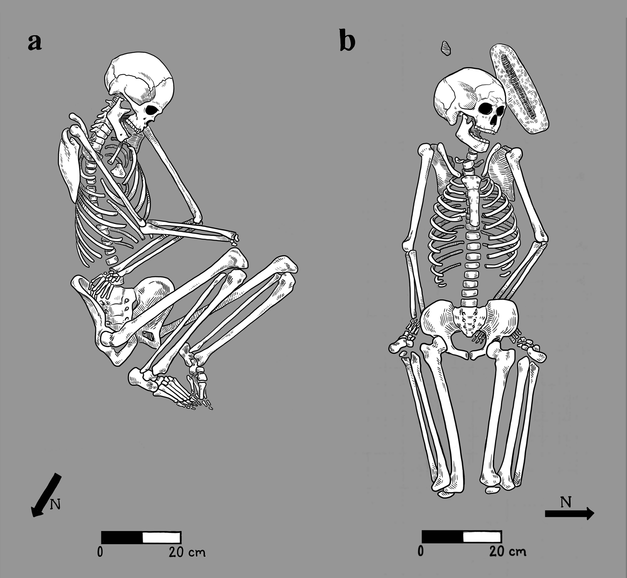 Bodies buried by family members were arranged in a flexed position on their side , while in atypical burials, bodies were left in more awkward positions .
