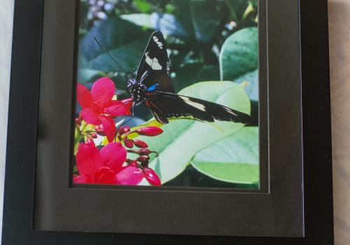 """""""Mariposa"""" by Erica Doe, police evidence and property technician for the UA Police Department"""