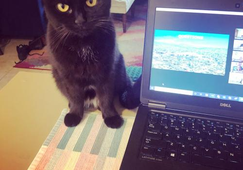 This is Raven. She's very happy I'm home more but doesn't like that she's not allowed to lay on my laptop. – Melynda Noble, senior coordinator of projects and events, University of Arizona Cancer Center