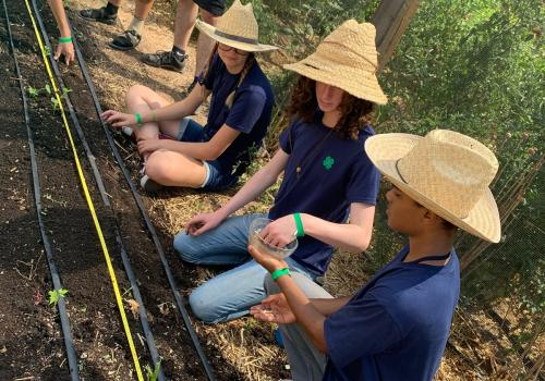 Some 4-H Summit participants planted seeds at the Tucson Village Farm, a working urban farm built by and for Tucson's youth through Pima County Cooperative Extension and the University of Arizona.