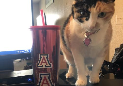 Here is my very hardworking new furry employee! Her name is Daisy, and this is how she greets me every morning, and the occasional jumping on my lap to see what's happening on my screen, of course. :) – Stephanie Schaller, enrollment counselor, Arizona On