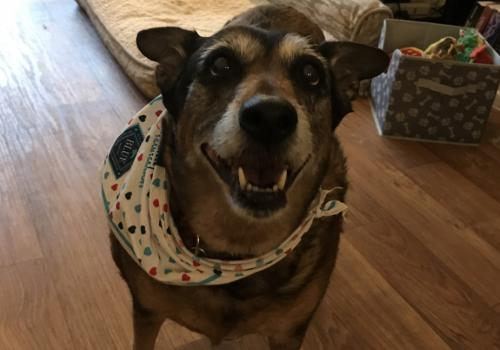 This here is my dog, Molly. Very eager to start her workday with pets and treats! – Haley Snellen, GIS technician at the Arizona Geological Survey