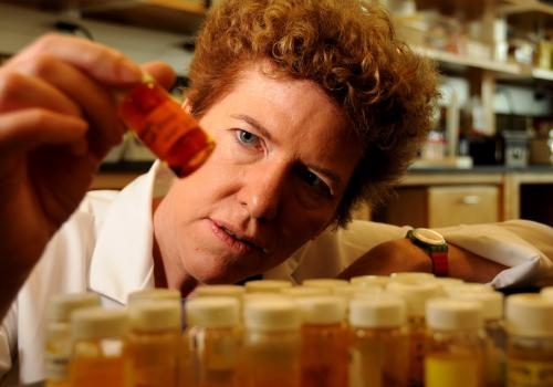 Dr. Janet Funk conducts research on ginger and turmeric because of their anti-inflamatory properties.