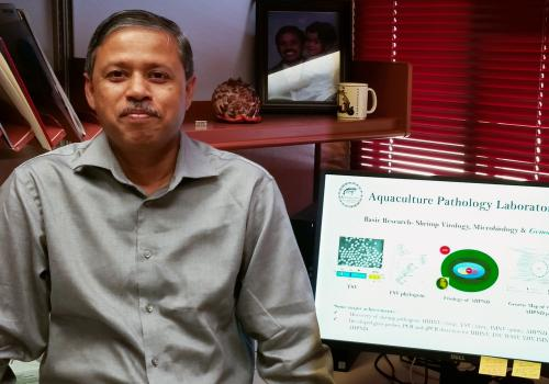 """Arun K. Dhar, director of the UA's Aquaculture Pathology Laboratory: """"When a disease emerges, we jump on it to determine the etiology , the methods to detect it and the tools to prevent the spread of the disease. Then we tell that story to various audienc"""